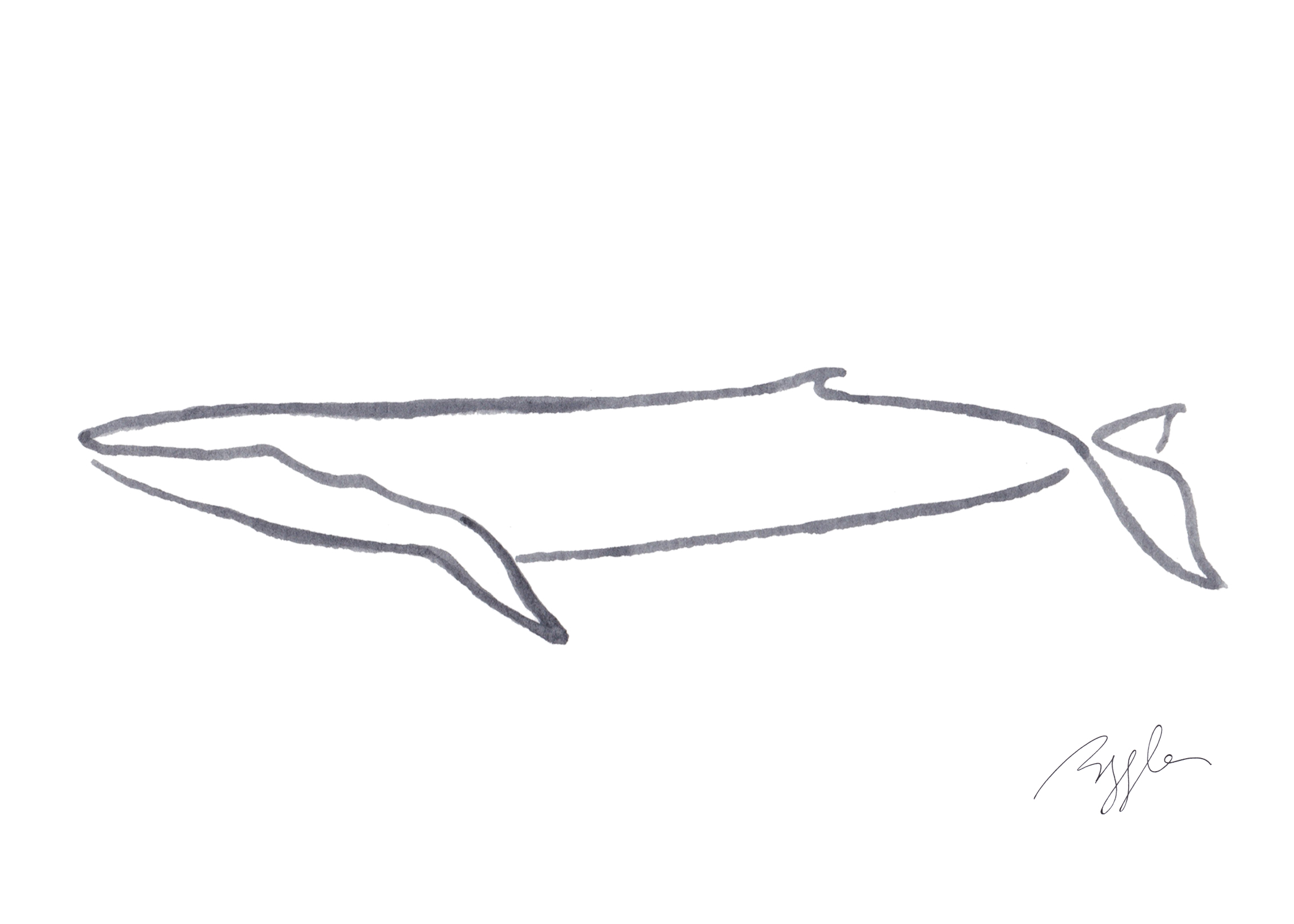 Brazzlebird - Bryde's Whale Line Watercolor Painting.jpg