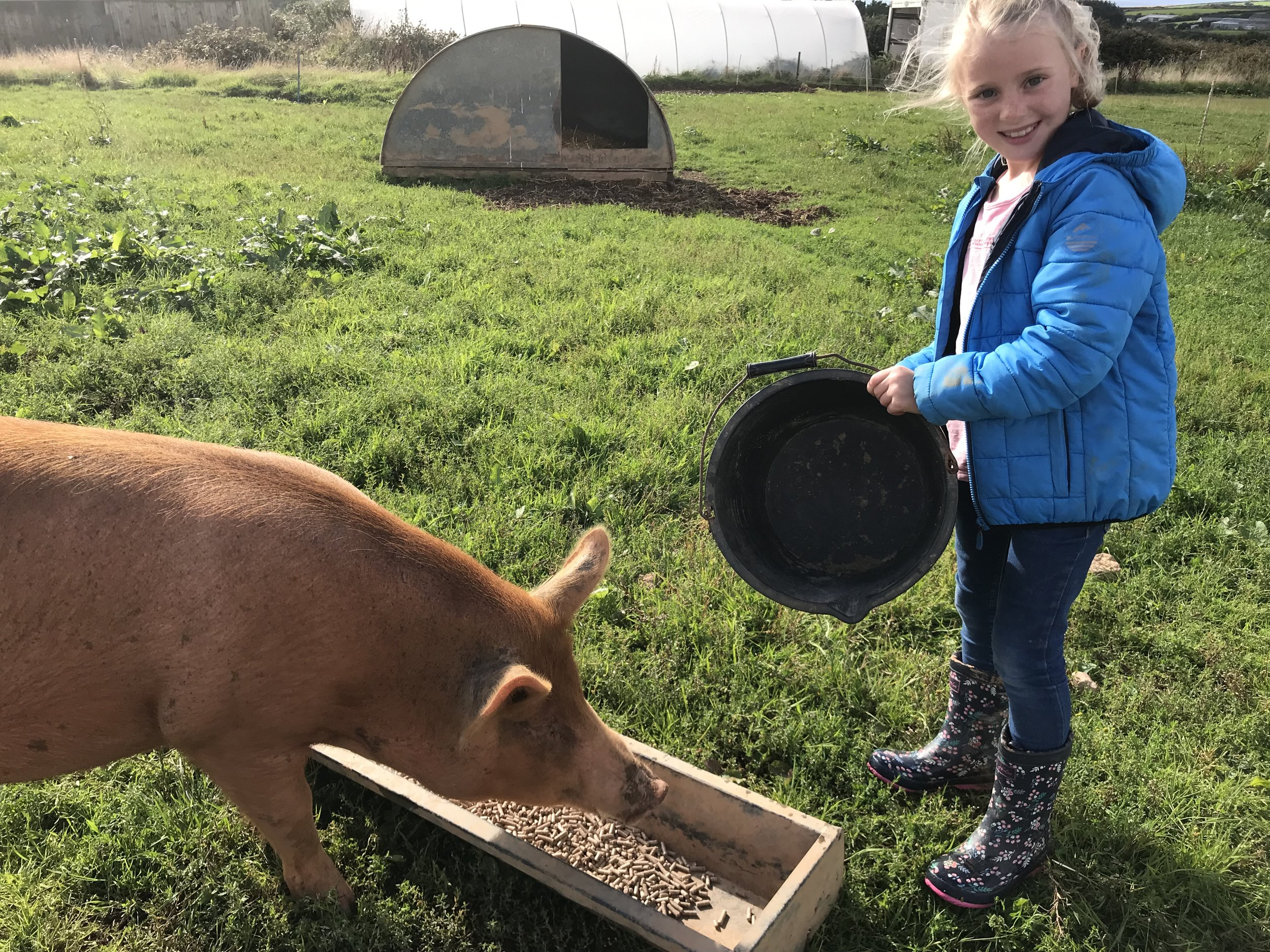 Pig feeding to finish off the day!