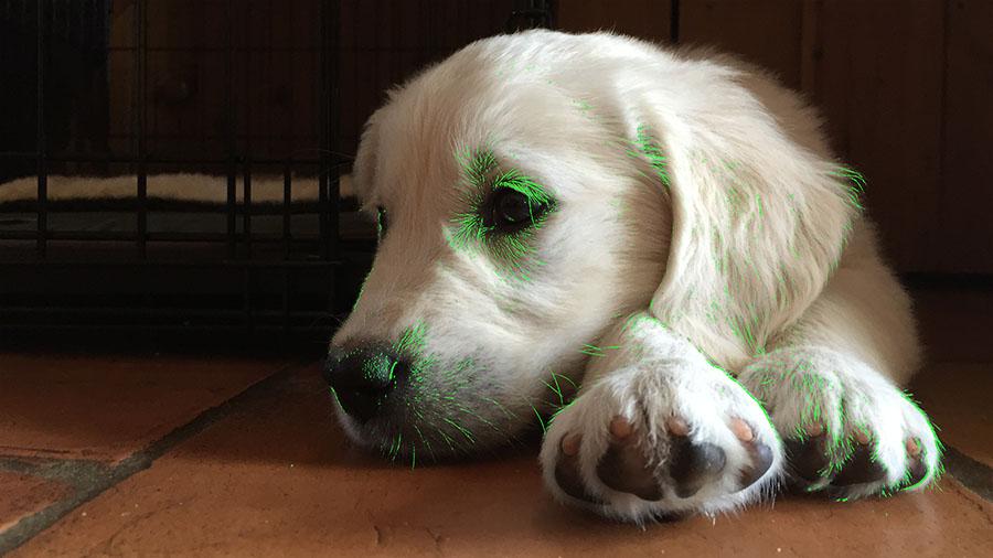 focus_peaking_dog@2x.jpg