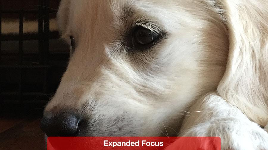 expanded_focus@2x.jpg
