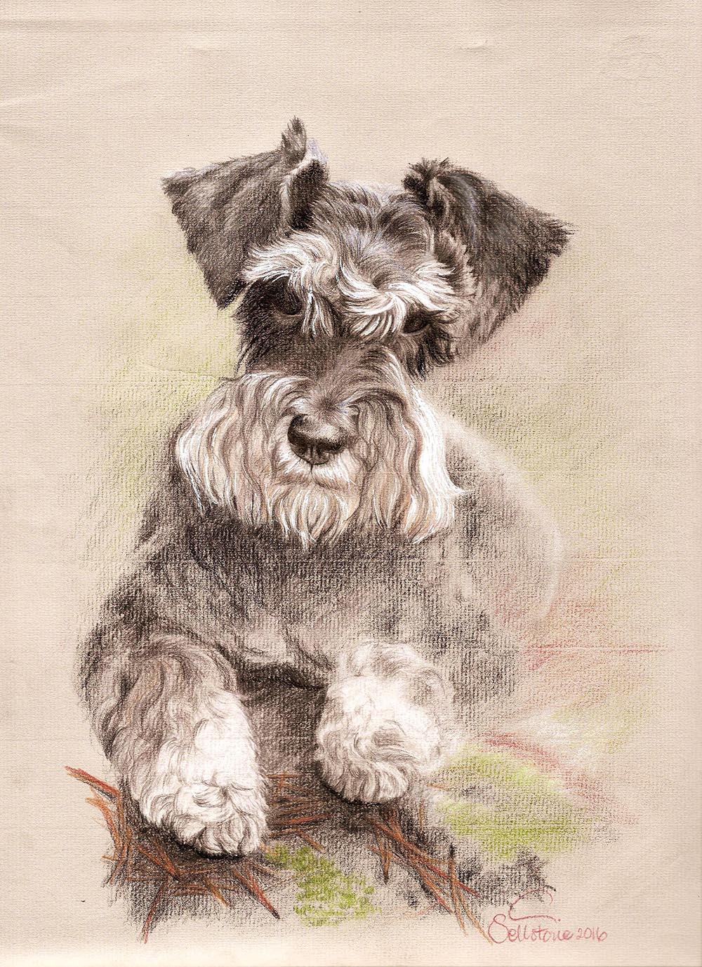 sally dog hund portrait.jpg