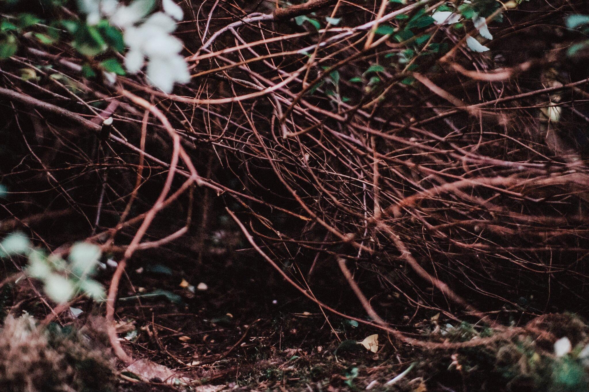Nämnda spireakvistar som bär upp hela busken.