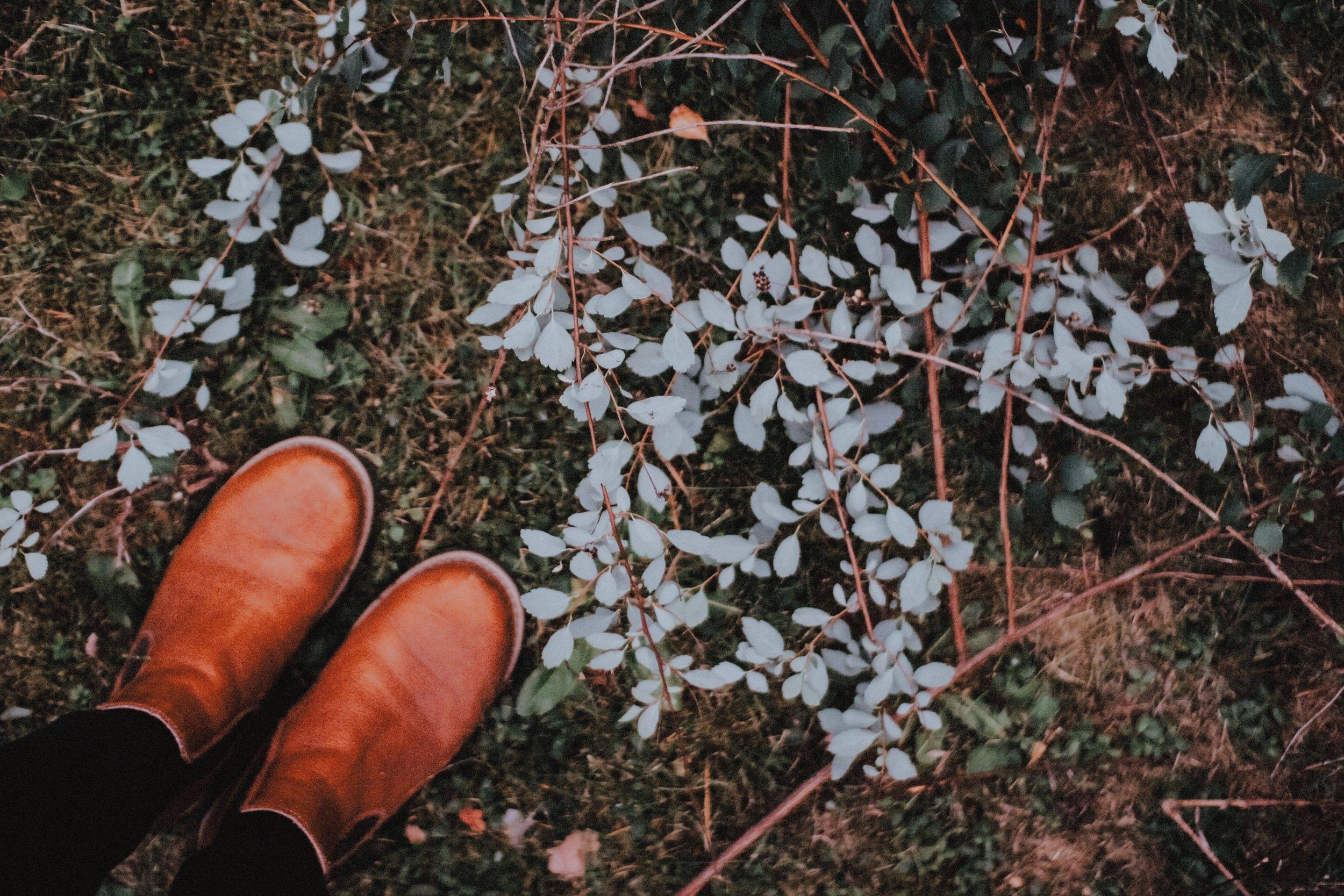 Några friska kvistar råkade följa med ned…