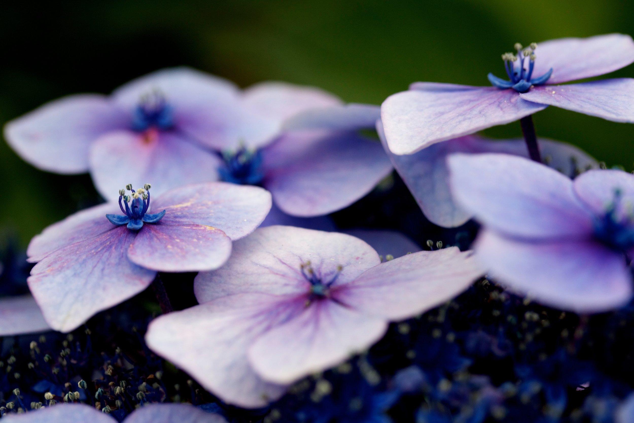 Adelaide floristry school workshops.jpg
