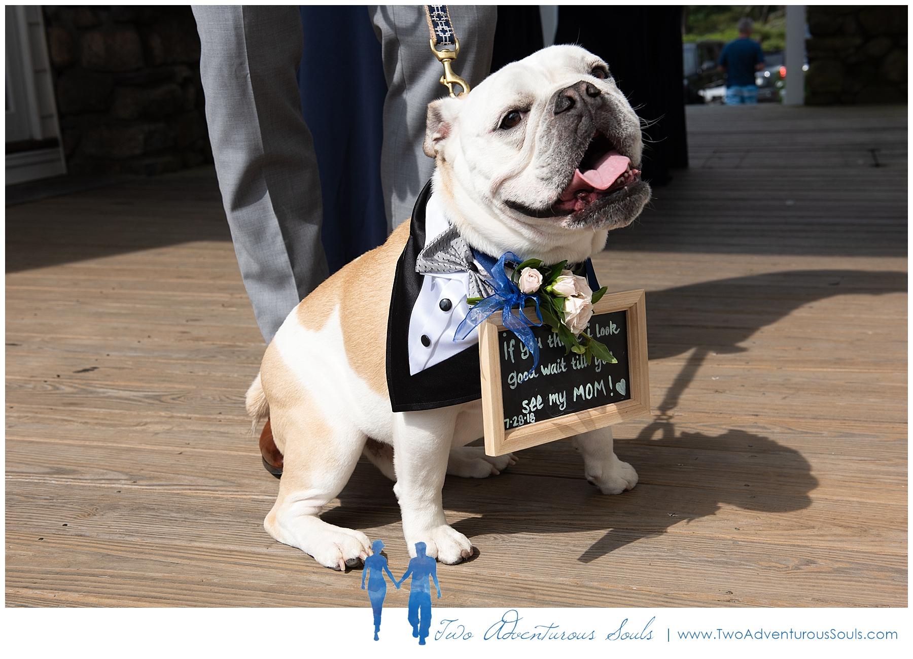 Colony Hotel Wedding, Kennebunkport Wedding Photographers, maine Wedding Photographers - dog ring bearer