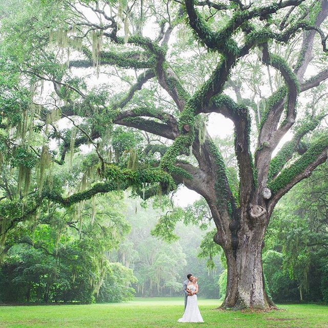 Is this place real or straight out of a fairytale? 💚  @ashleynicoleevents Photo by @priscillathomasphoto  #engaged #engaged💍 #isaidyes #isaidyes💍 #heasked #weddingplanning #weddinginspiration #wedding #bride #engagementring #weddingring #engagement #engagements #wedding #bridebox #bridalbox #bridalsubscriptionbox #bridalgift #weddingbox #bridegift #subscriptionbox #subscriptiongifts #engagementbox #engagementgift
