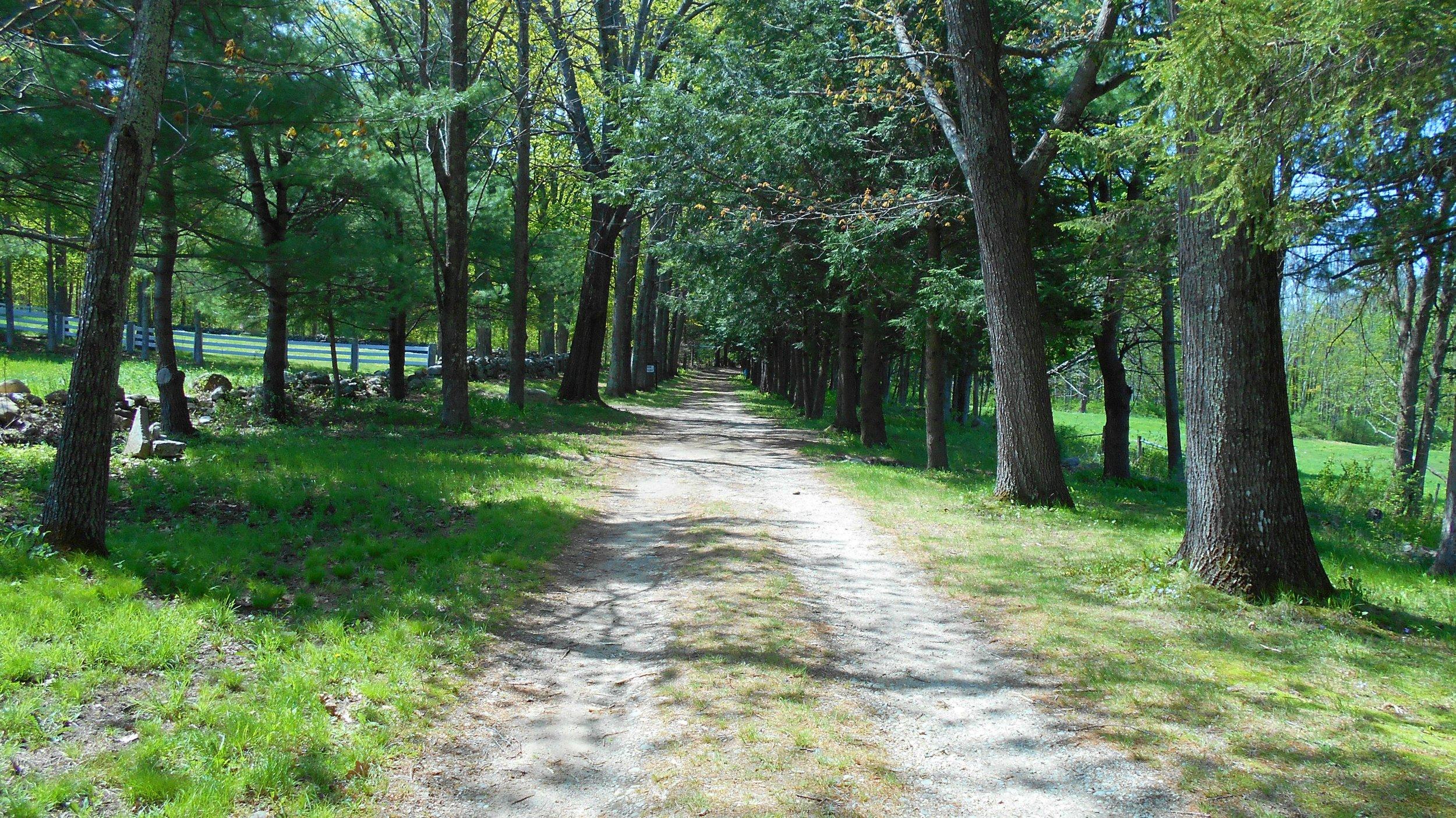 shrine trail.JPG