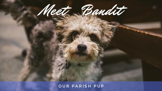 Part Terrier/Schnauzer/Swiss Shepherd/Chihuahua/ All Angel