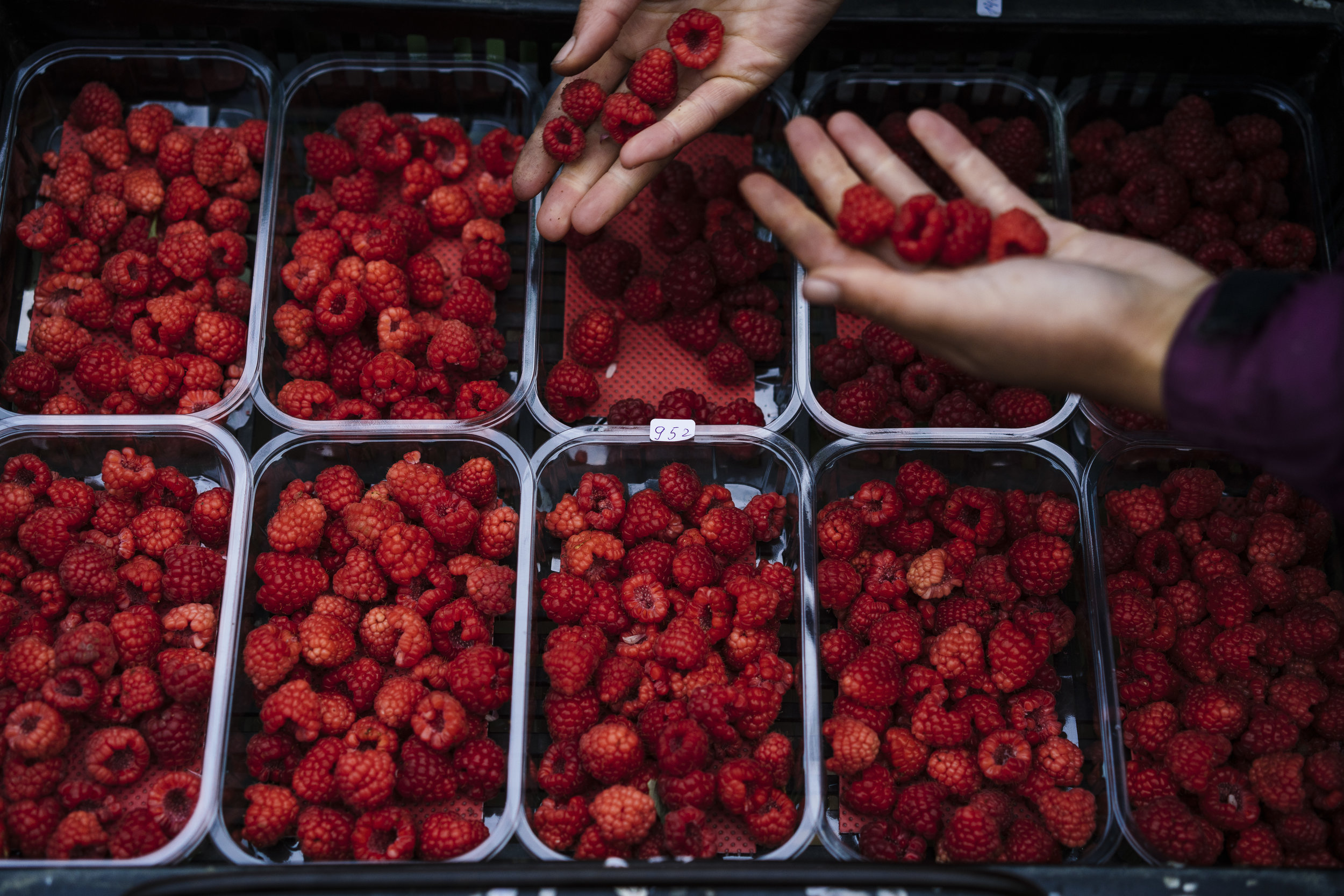 Bulgarian fruit picker Elena Hoola sorts freshly picked raspberries into punnets in one of the tunnels at Oakdene Farm, a fruit and vegetable farm owned by W.B. Chambers & Son in Langley, Kent, England, Thursday, Nov. 16, 2017. (David Azia for NBC News)