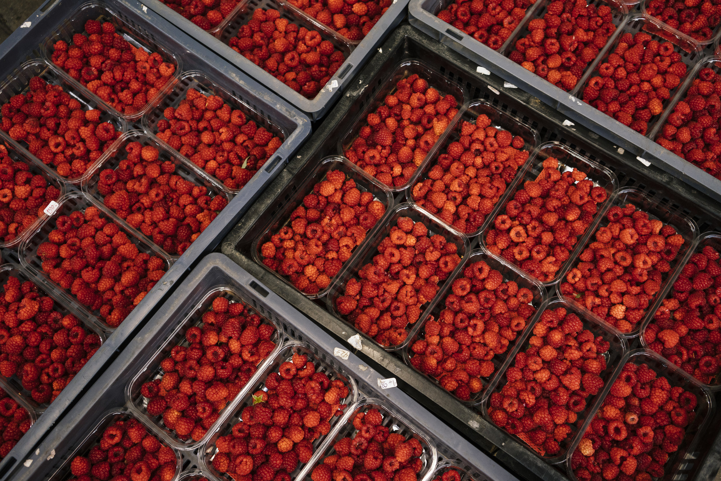 Punnets of raspberries in the pack house at Oakdene Farm, a fruit and vegetable farm owned by W.B. Chambers & Son in Langley, Kent, England, Thursday, Nov. 16, 2017. (David Azia for NBC News)