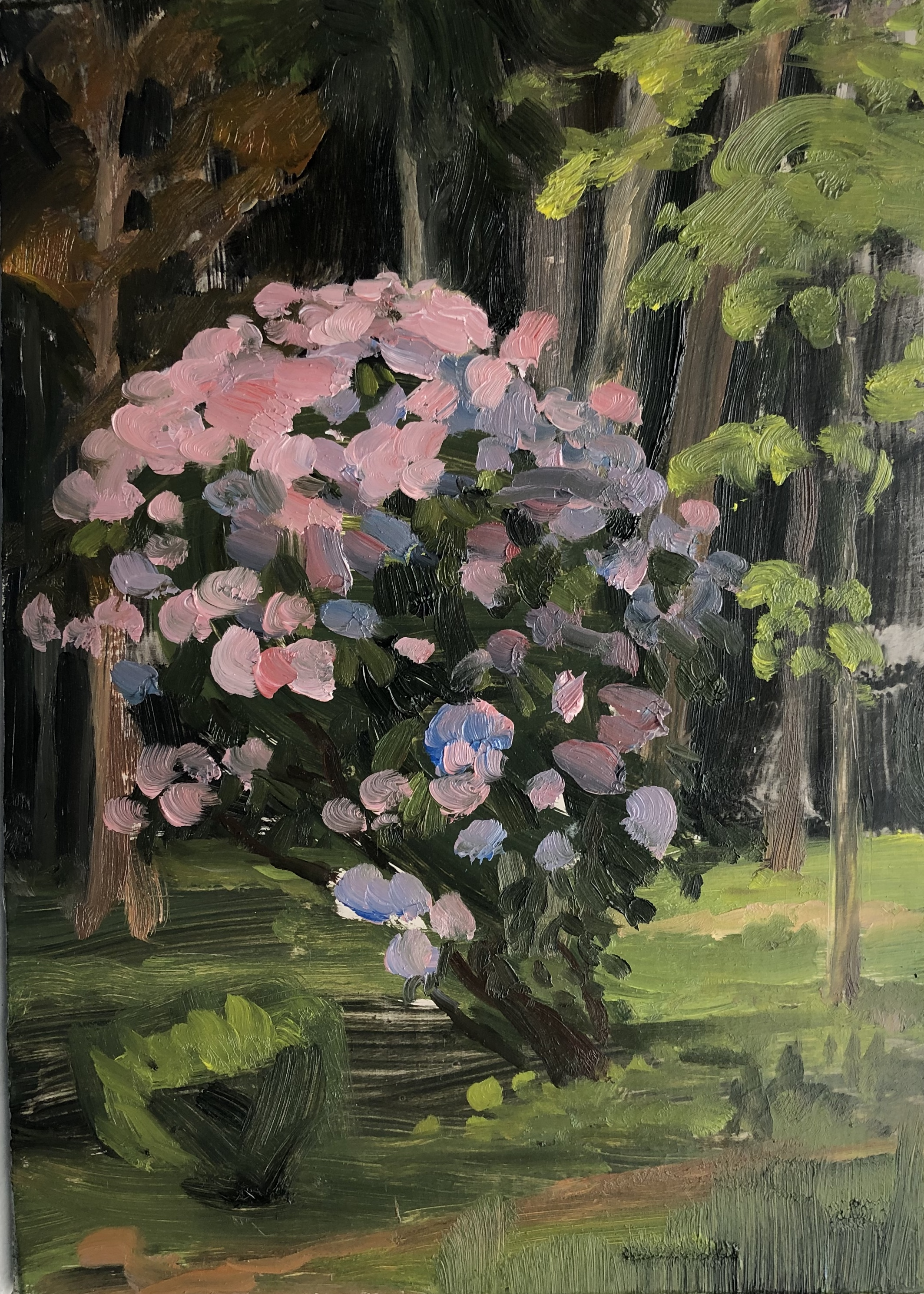 Rhododendron at Twilight Oil on panel 6 by 8 inches May 25, 2018