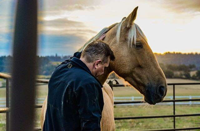 """""""In the end, we don't know what horses can do. We only know that when, over the past thousands of years, we have asked something more of them, at least some of them have readily supplied it."""" - Jane Smiley #equuscoaching#healingwithhorses#koelleinstitute#pathfindrcoaching#creativity#authenticself"""