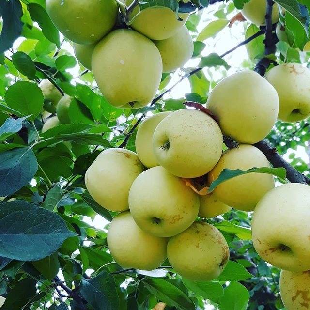 Happy  Labor Day.  #HappilyEverAlways #Chicago #broker #author #invest #CondosForSale #HousesForSale #home #luxury #LaborDay #family #friends #apples #Autumn #lifestyle #MillionDollarListings #grateful #Fall #thankful #happy #GetListed