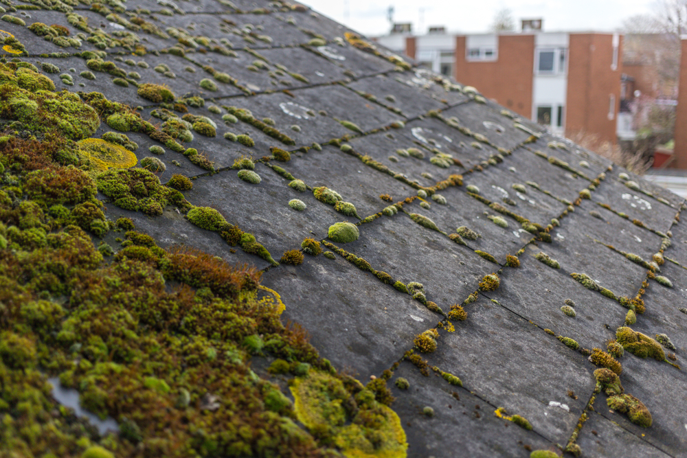 damage roof.jpg