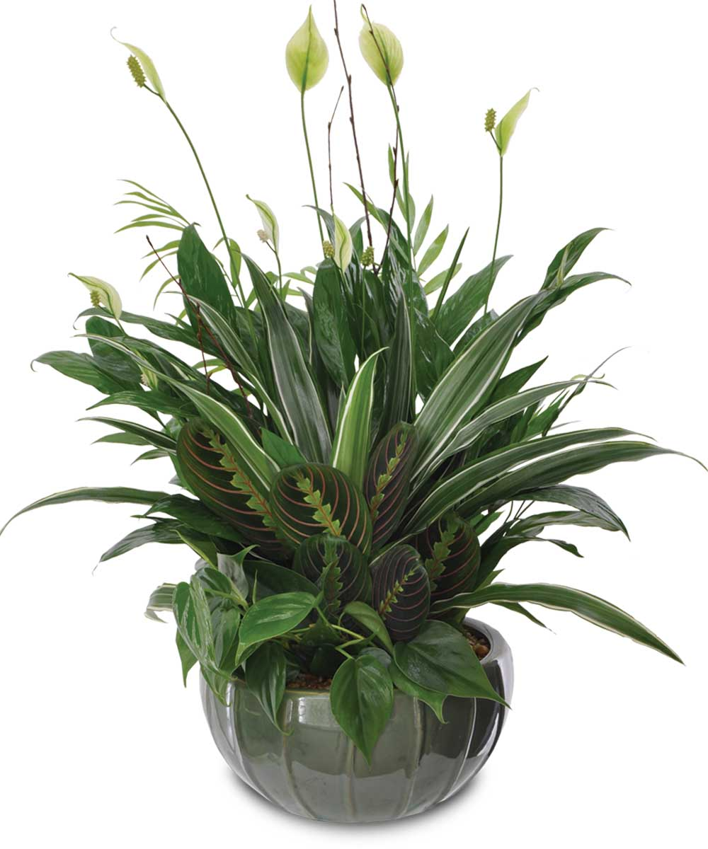 Sympathy Plants -
