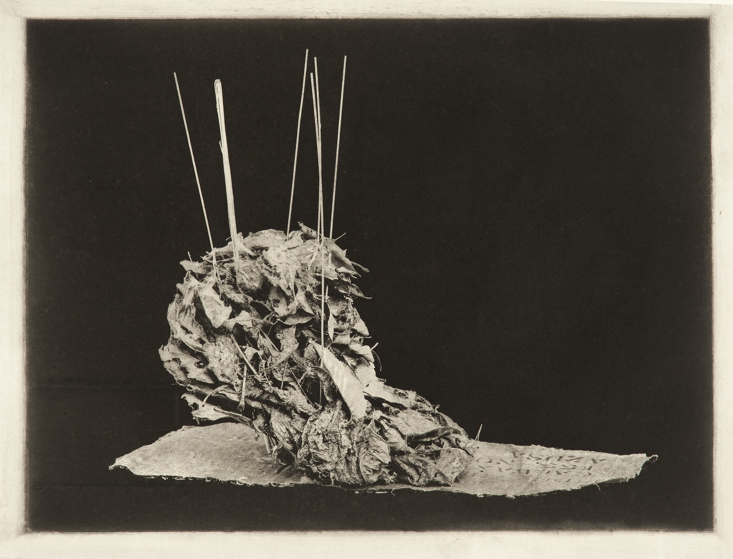 """""""Homage to Medaro Rosso"""", 22"""" x 30"""", photogravure of leaf sculpture"""