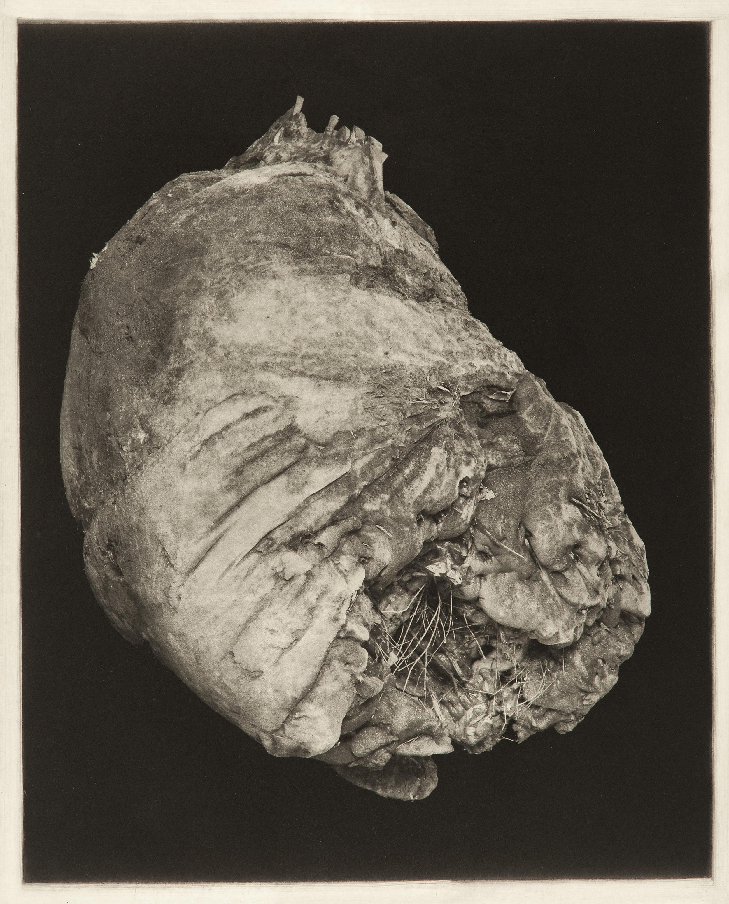 """Degeneration # 4472"", 22"" x 30"", photogravure of urethane sculpture weathered"