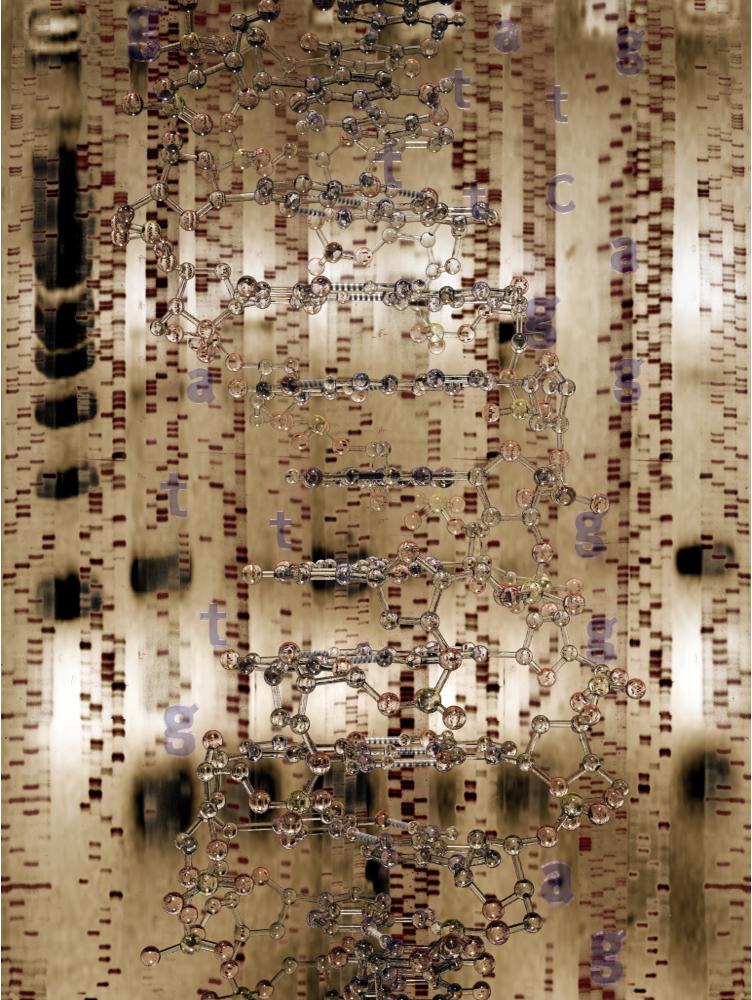 Cryptobiology: Reconstructing Identity, 2001