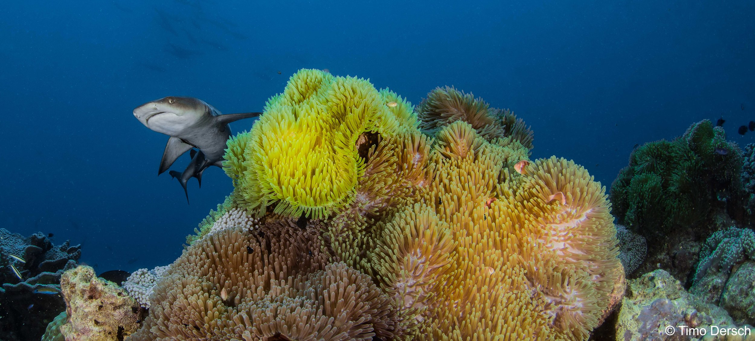 40% Off Selected Trips - To celebrate the launch of Oceania we are excited to be offering 40% off selected trips in 2019 so that you can join us to enjoy some of the worlds best diving on our new vessel.