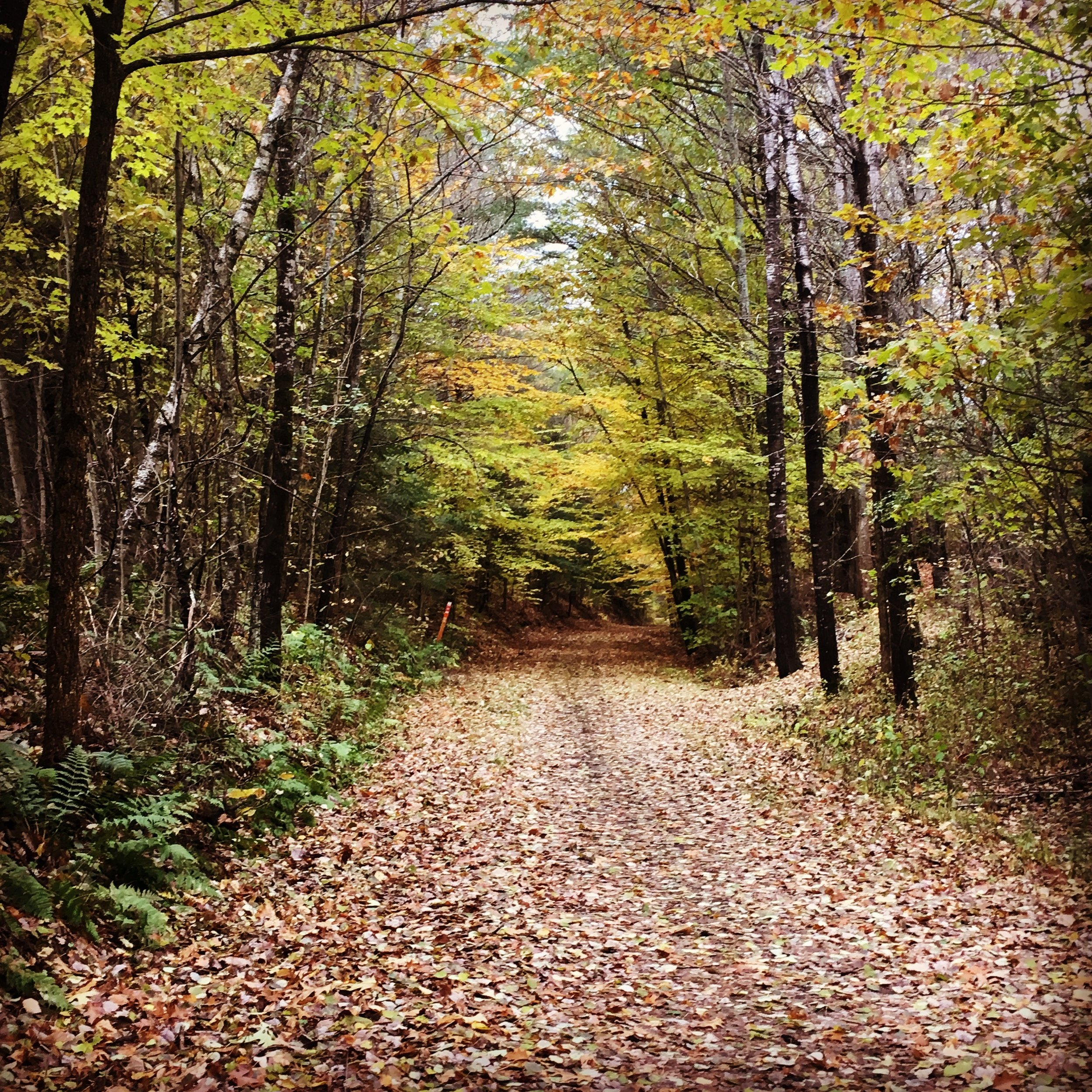 Northern Rail-Trail in Enfield, New Hampshire