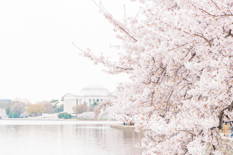 DC Cherry Blossoms 45