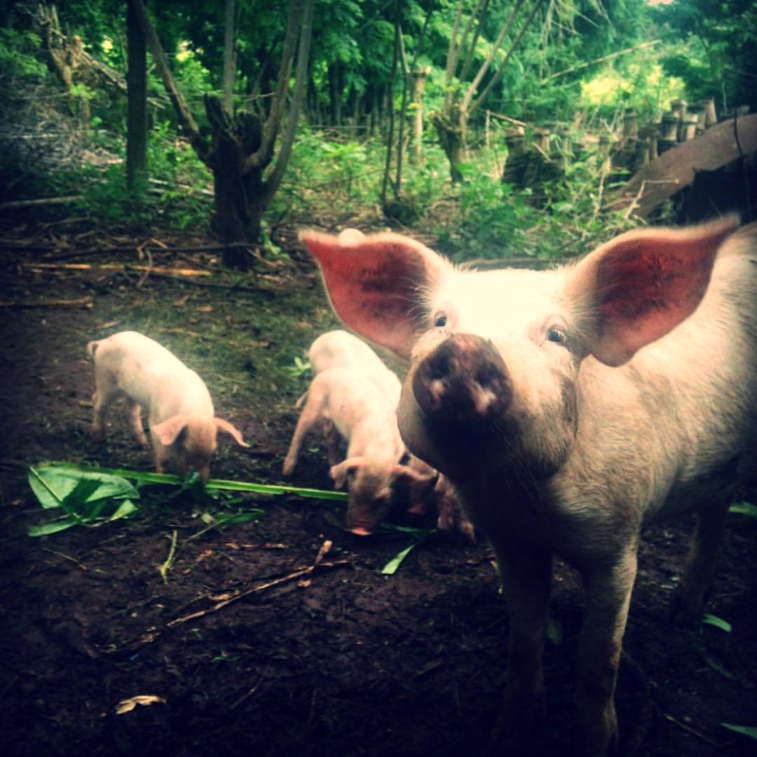 selvista_permaculture_farm_Balgue