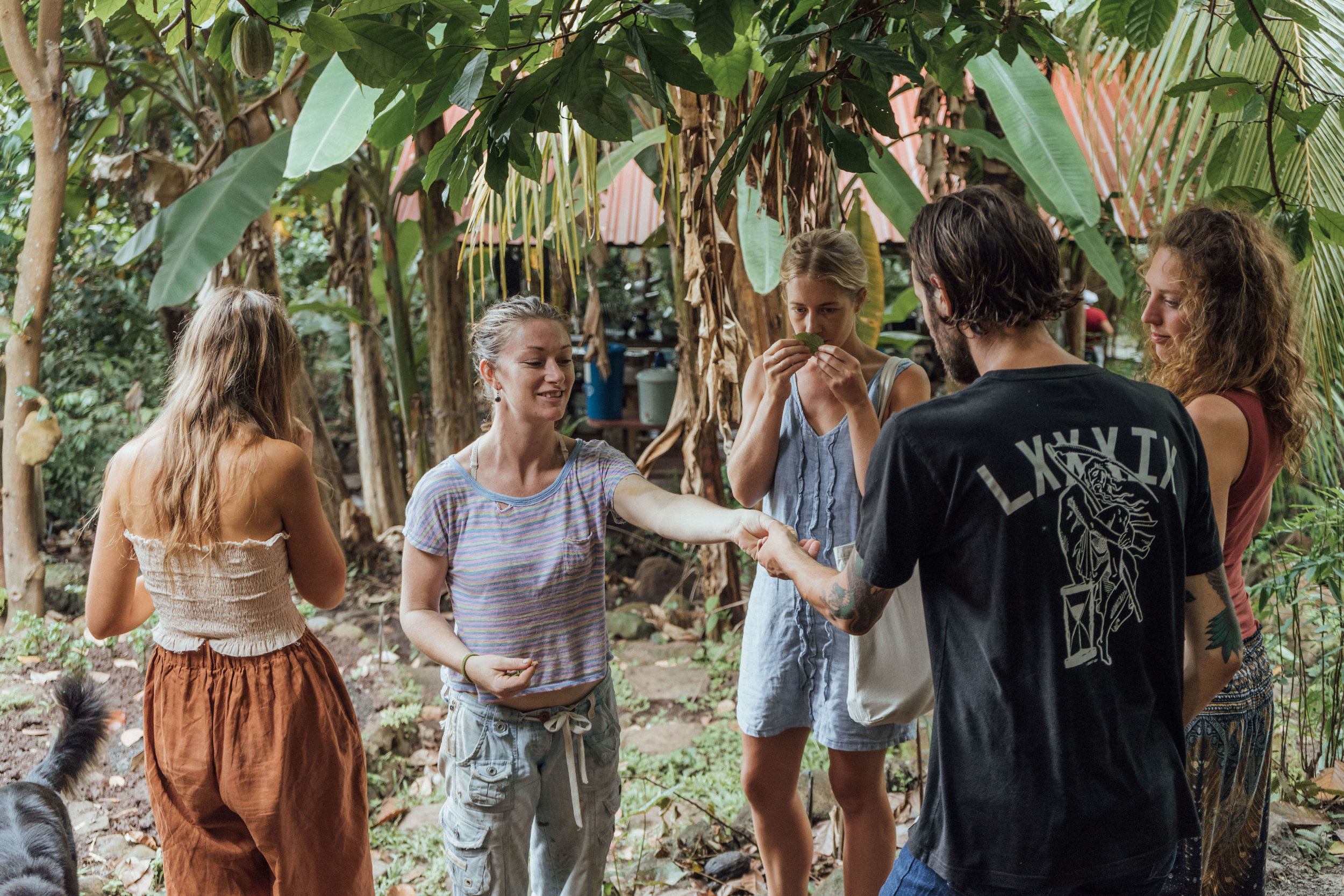 permaculture farm tours and farm produce included free in your stay
