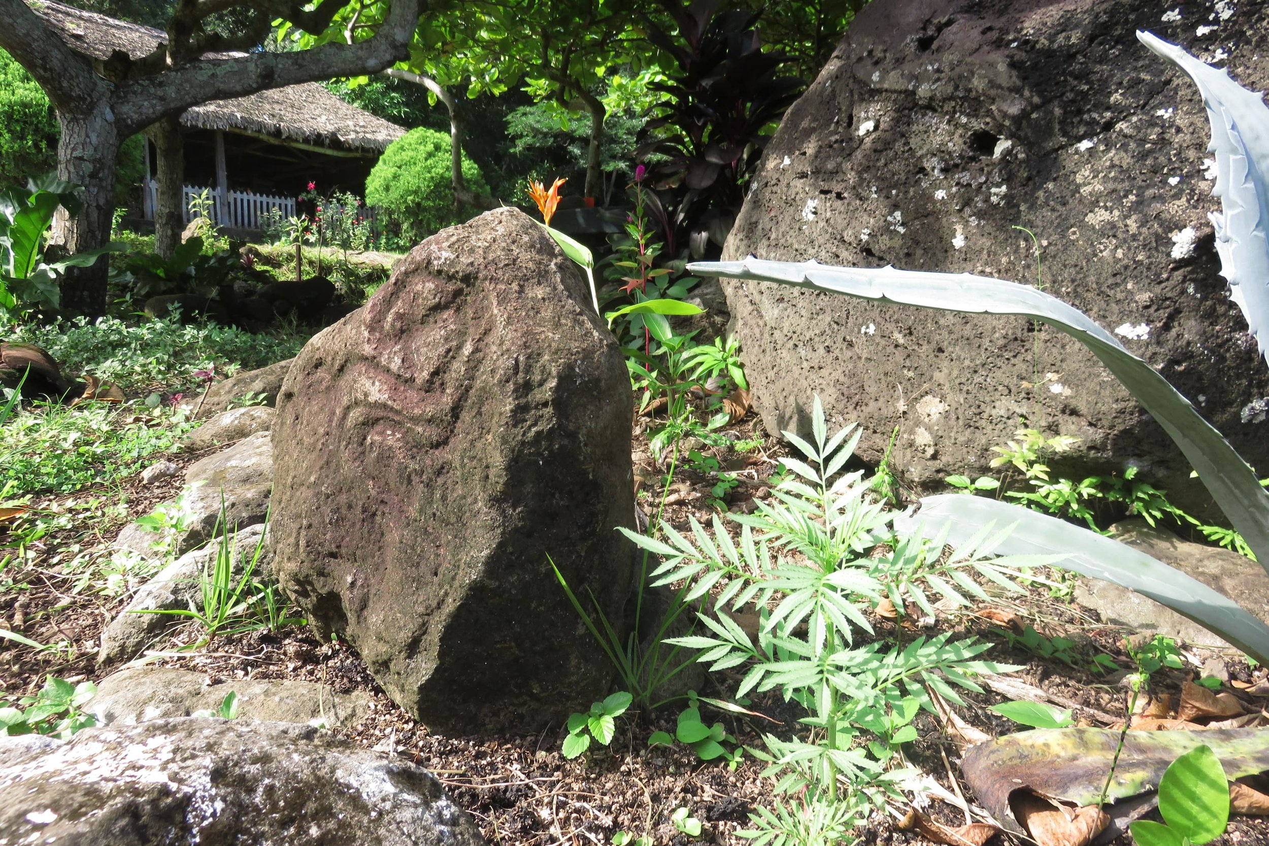 pre-columbian petroglyphs on Isla Ometepe at Selvista's neighbouring Finca Magdalena