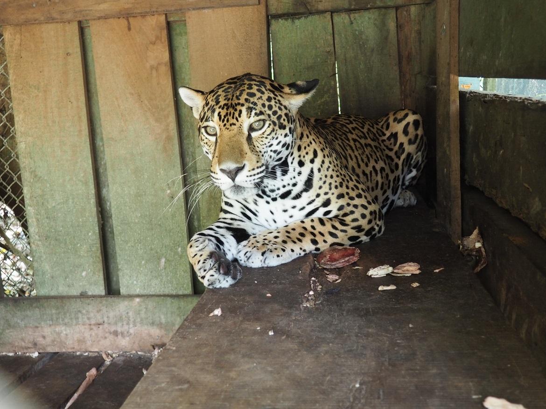 Jaguar-Preserve.jpg