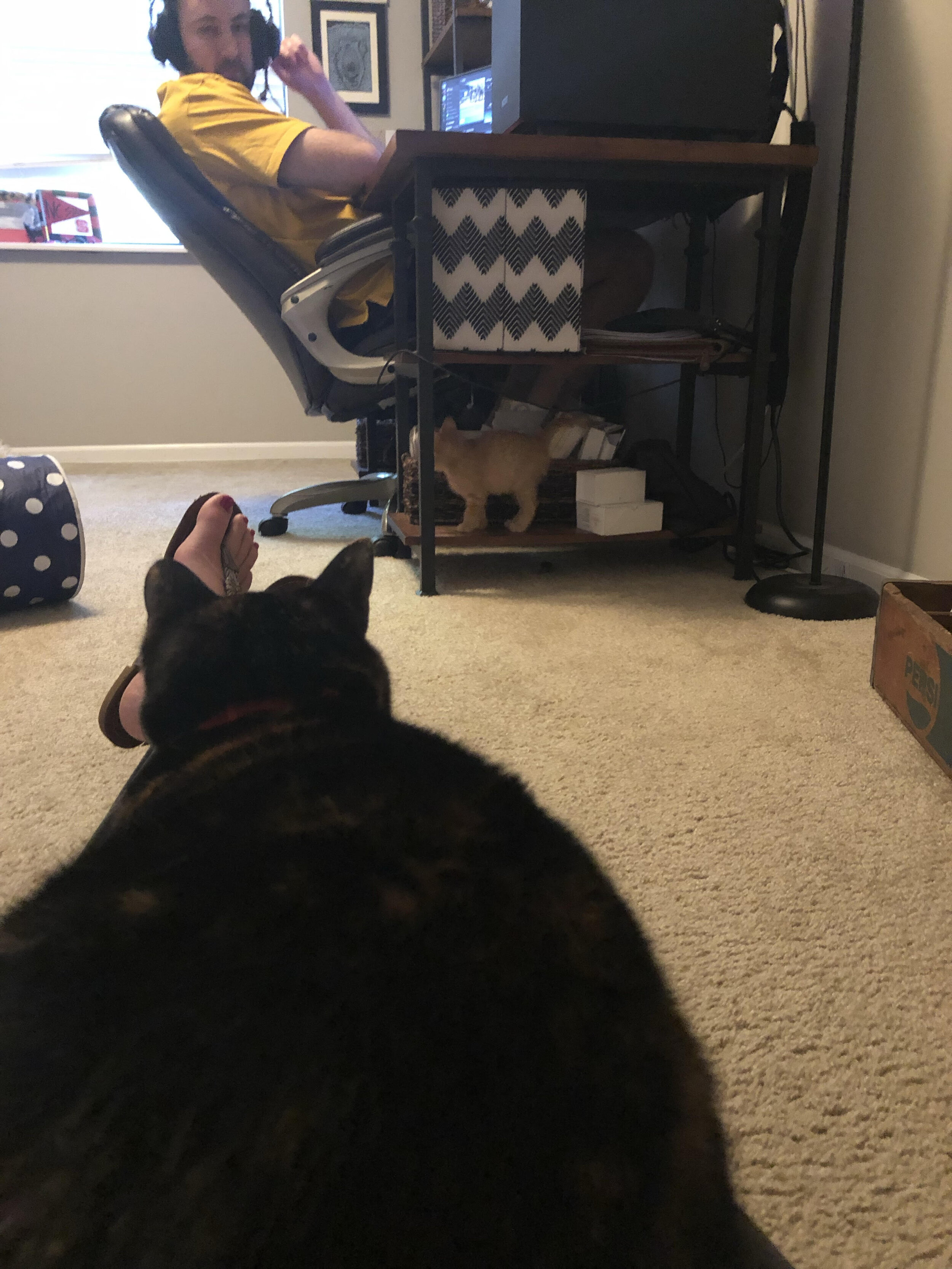 Callie giving Lil Cat a wide birth.