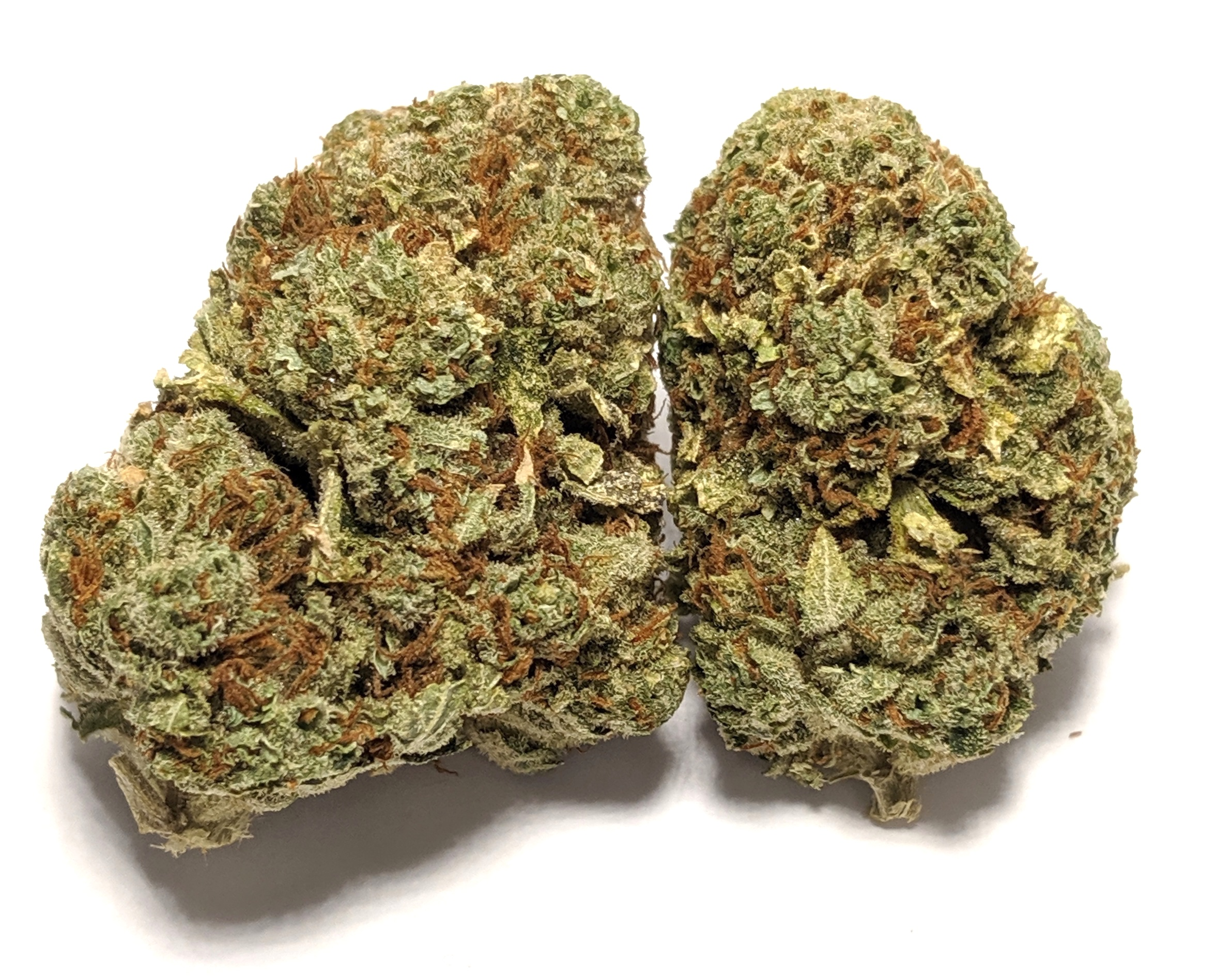 Girl Scout Cookies *BC Drop* Hybrid    1/4-$60 1/2-$110 OZ-$200   GSC, formerly known as Girl Scout Cookies, is an OG Kush and Durban Poison hybrid cross whose reputation grew too large to stay within the borders of its California homeland. With a sweet and earthy aroma, GSC launches you to euphorias top floor where full-body relaxation meets a time-bending cerebral space. A little goes a long way with this hybrid, whose THC heights have won GSC numerous Cannabis Cup awards. Patients needing a strong dose of relief, however, may look to GSC for severe pain, nausea, and appetite loss. There are several different phenotypes of the GSC strain including Thin Mint and Platinum Cookies, which exhibit some variation in appearance and effect. Typically, however, GSC expresses its beauty in twisting green calyxes wrapped in purple leaves and fiery orange hairs.