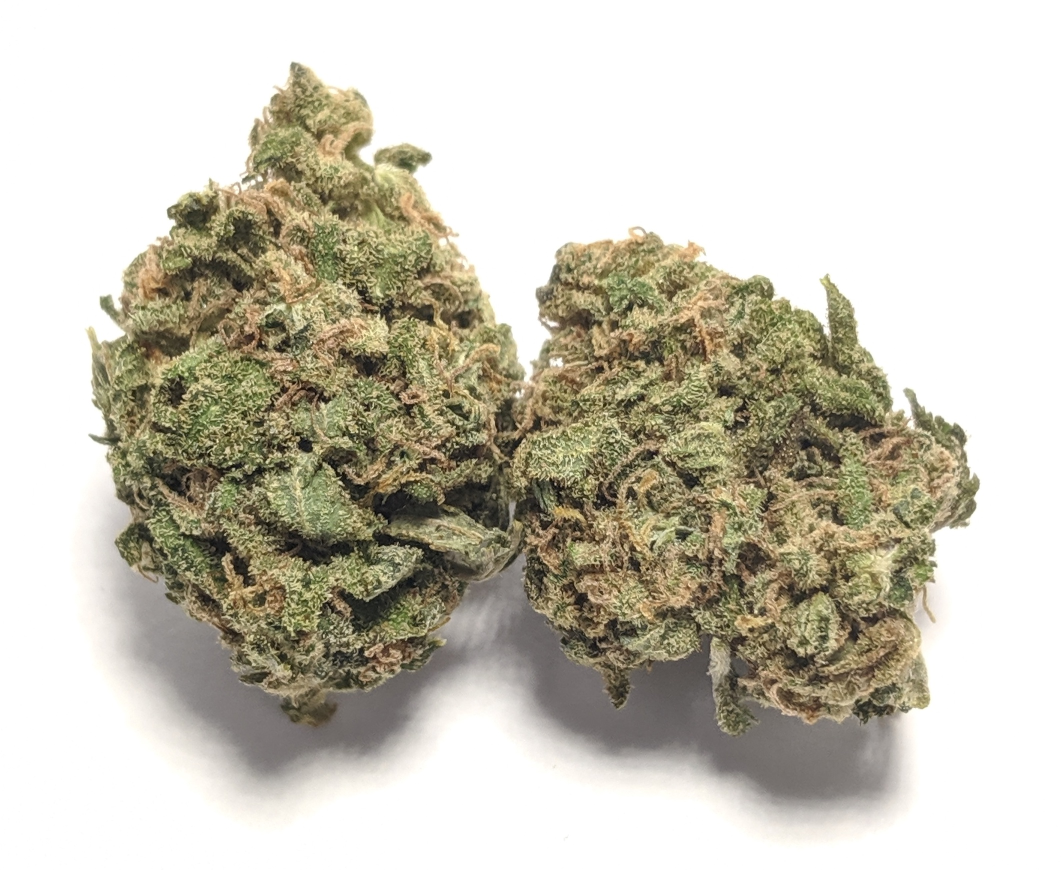 Blueberry Muffin- Hybrid    1/4- $60 1/2-$100 OZ-$180   Produced by Humboldt Seed Co., Blueberry Muffinsometimes called Blueberry Muffinsis an indica-dominant cross of Blueberry and Purple Panty Dropper. Revered for its uniform bud structure and purple-tinted flowers, this cross smells like a tray of fresh baked muffins. Its berry sweetness is softened by a smooth, creamy finish and makes for a tasty joint.