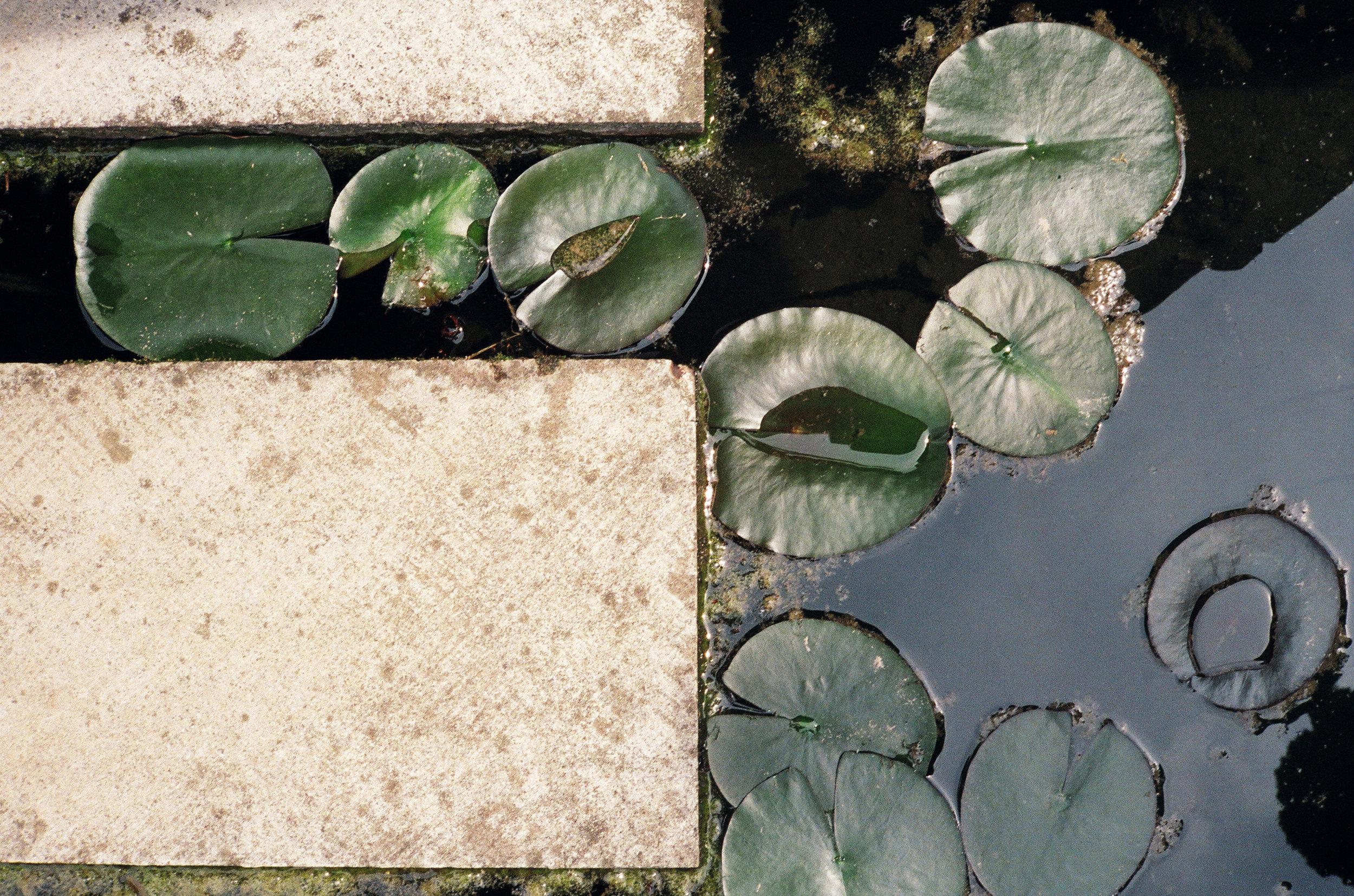 Altivole, Italy : Kodak Portra 400