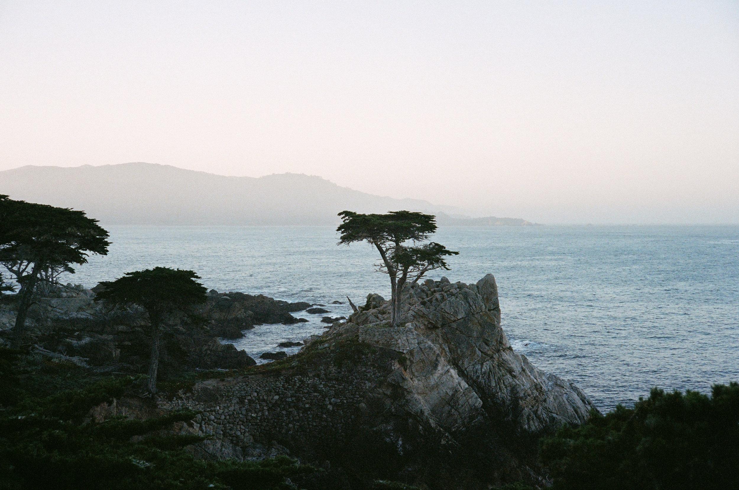 Del Monte Forest, California : Kodak Portra 400