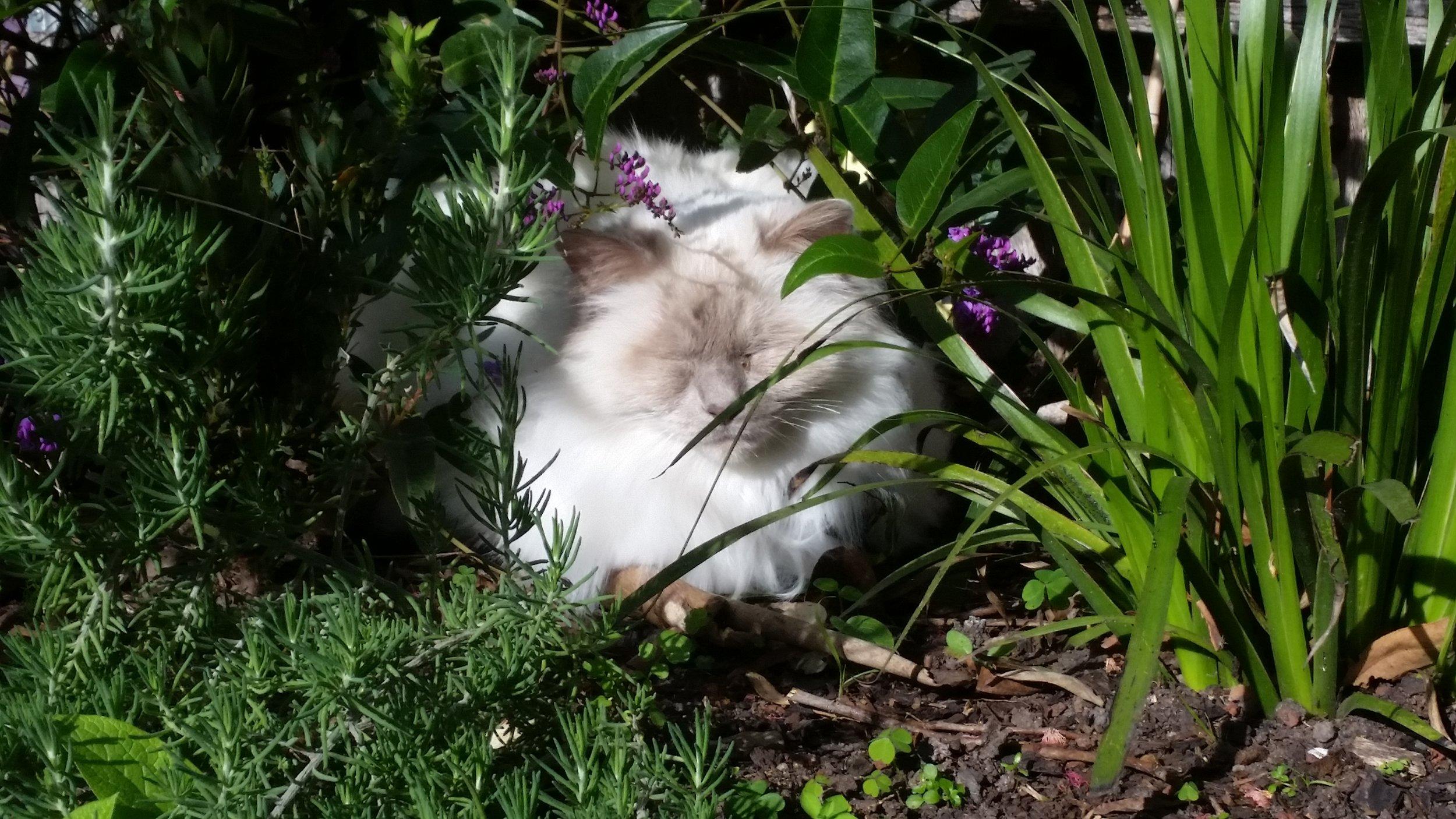 Zeus the cat enjoying the therapeutic benefits of plants