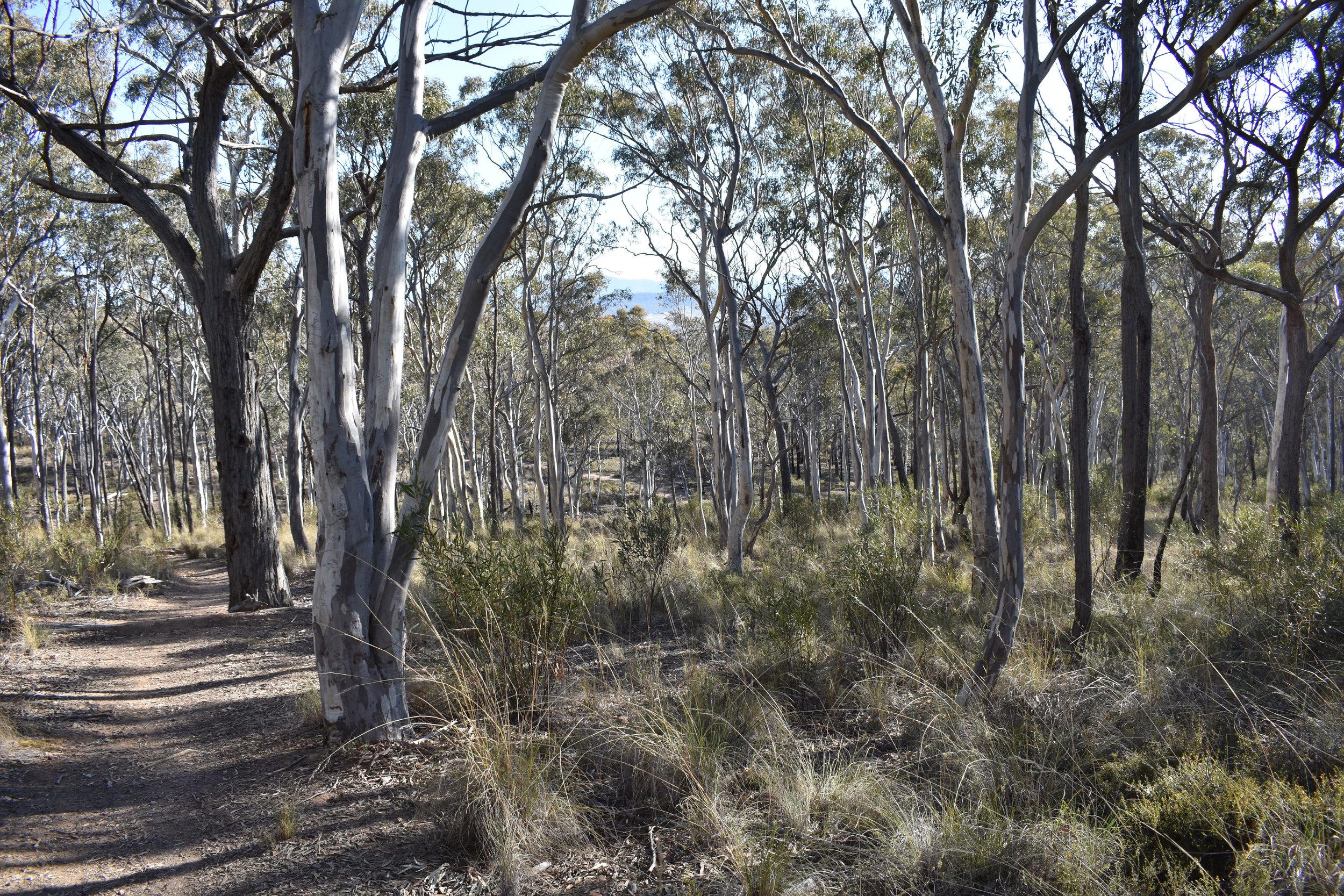 Aranda Bushlands on a sunny winter morning