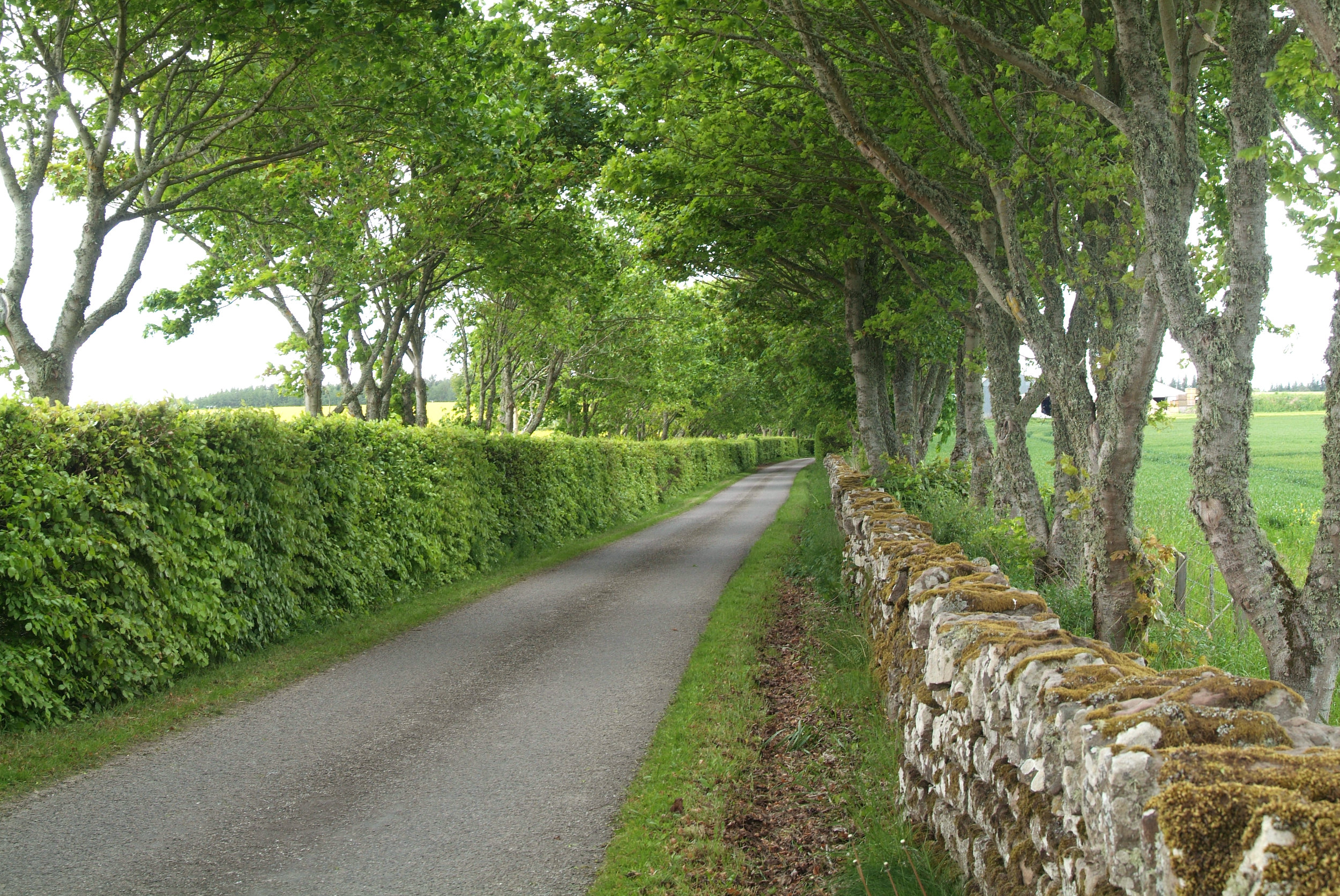 Country Cottage, countryside driveway