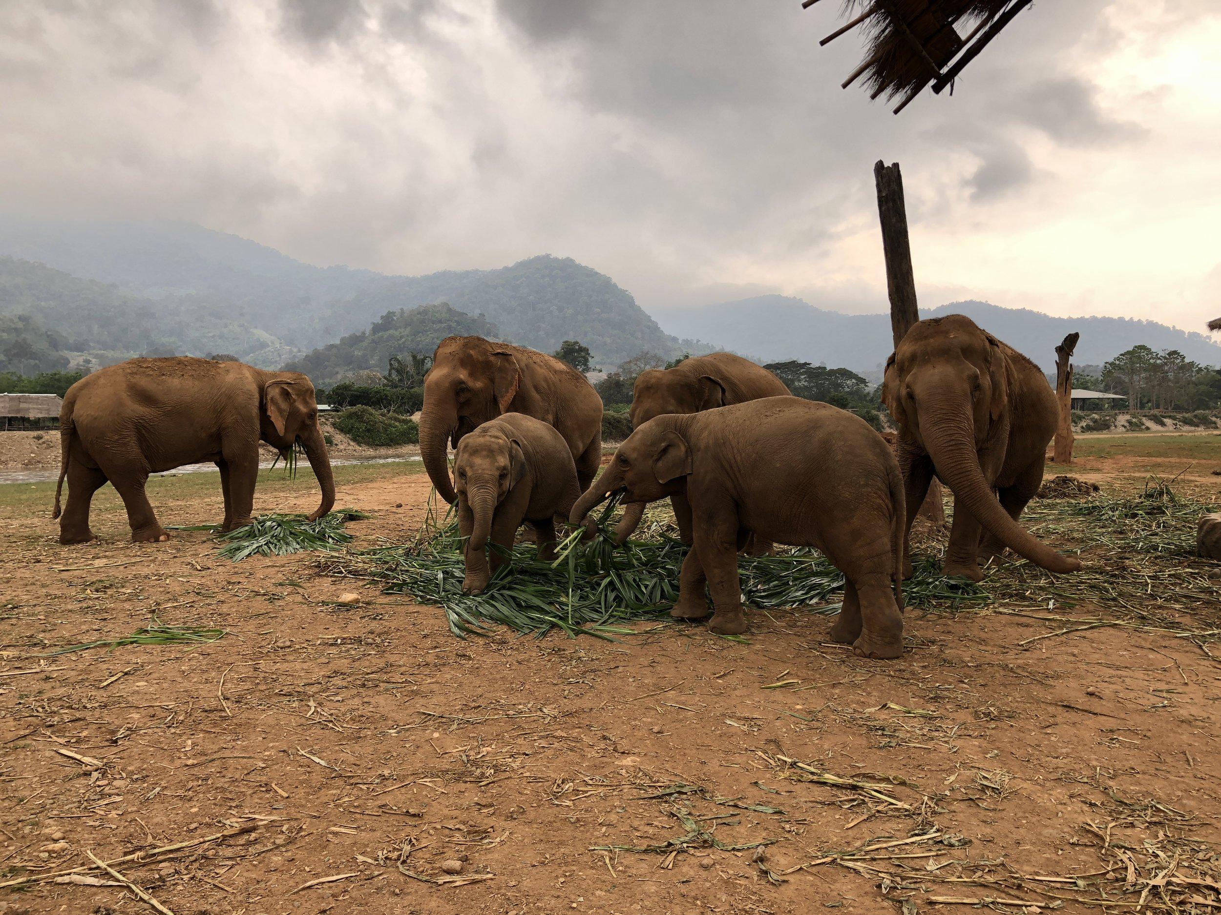 Choosing an Ethical Elephant Sanctuary | The Lavorato Lens