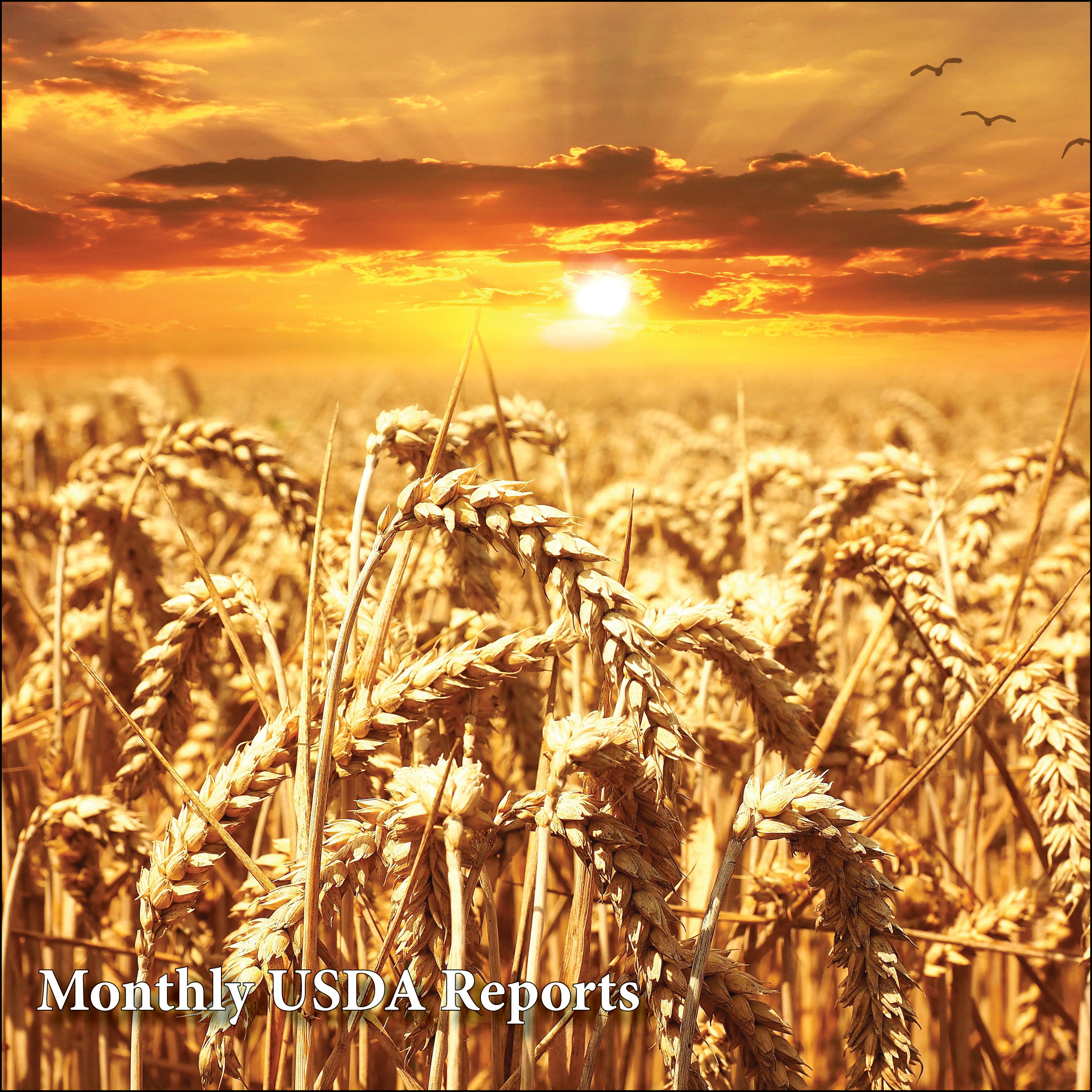 Monthly USDA Reports    USDA WORLD AGRICULTURAL SUPPLY & DEMAND    USDA LIVESTOCK, DAIRY & POULTRY OUTLOOK    USDA FEED OUTLOOK    USDA WHEAT OUTLOOK    USDA OIL CROPS REPORT