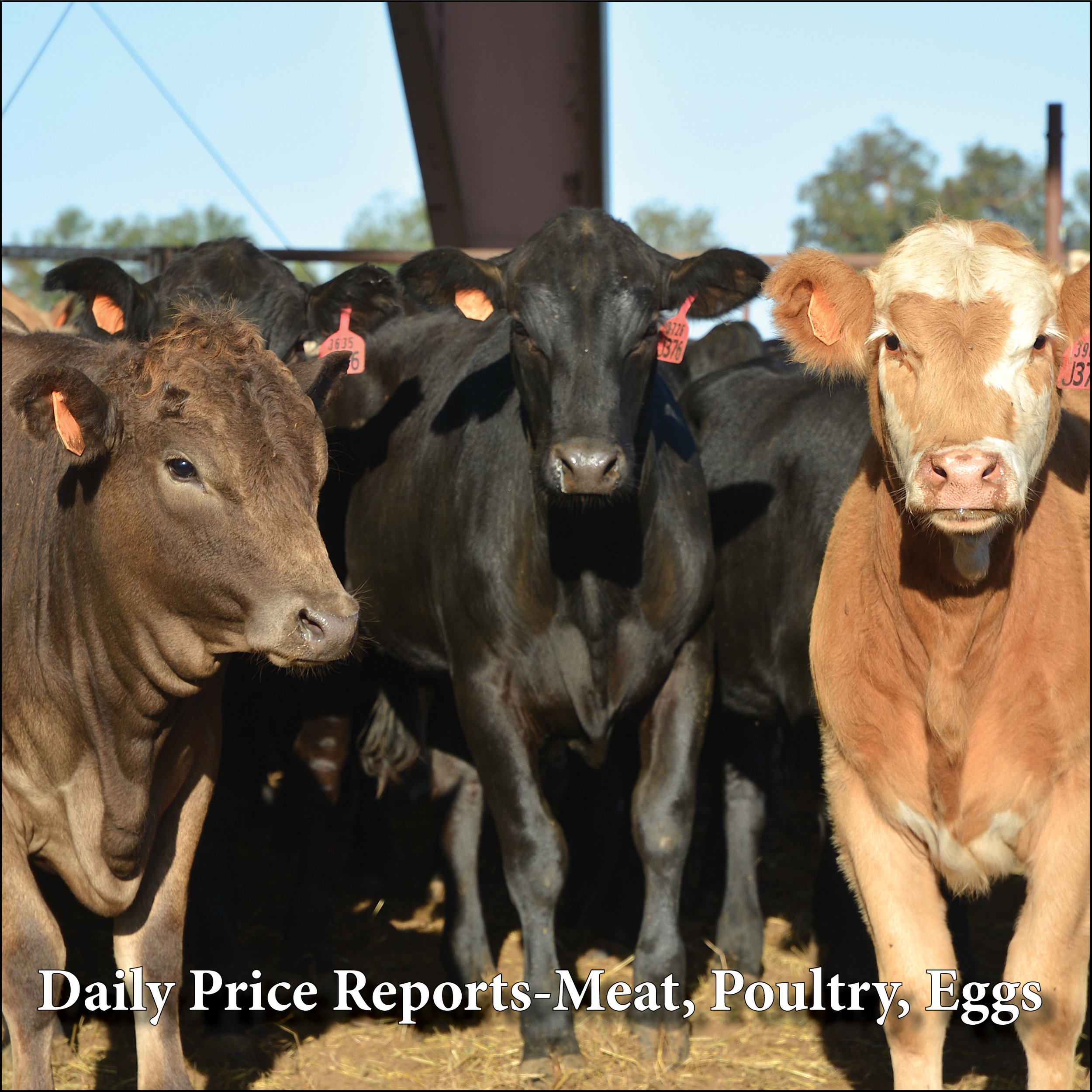 Daily Price Reports – Meat, Poultry, Eggs    USDA BOXED BEEF    USDA BEEF TRIMMINGS    USDA PORK    CME FUTURES – LIVESTOCK    USDA NORTHEAST BROILER PARTS    USDA REGIONAL EGG MARKETS