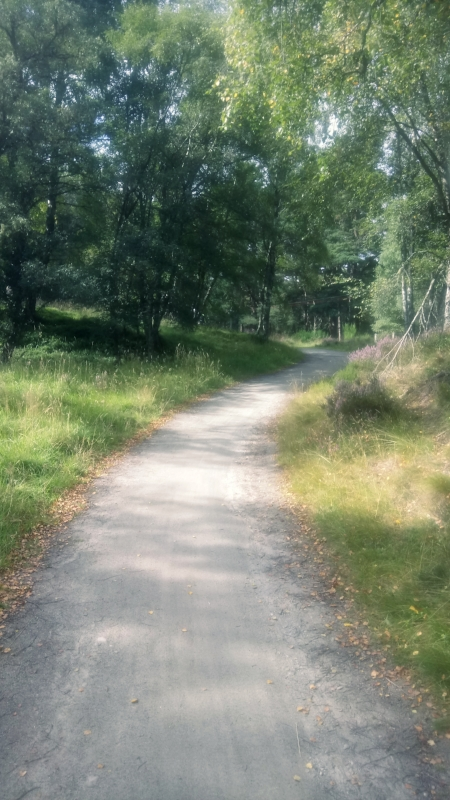 Rural path in woodland Scotland Aviemore
