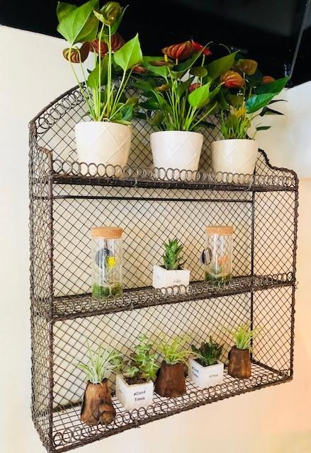 Plants_succulents_terrarium_store_August 18.jpg