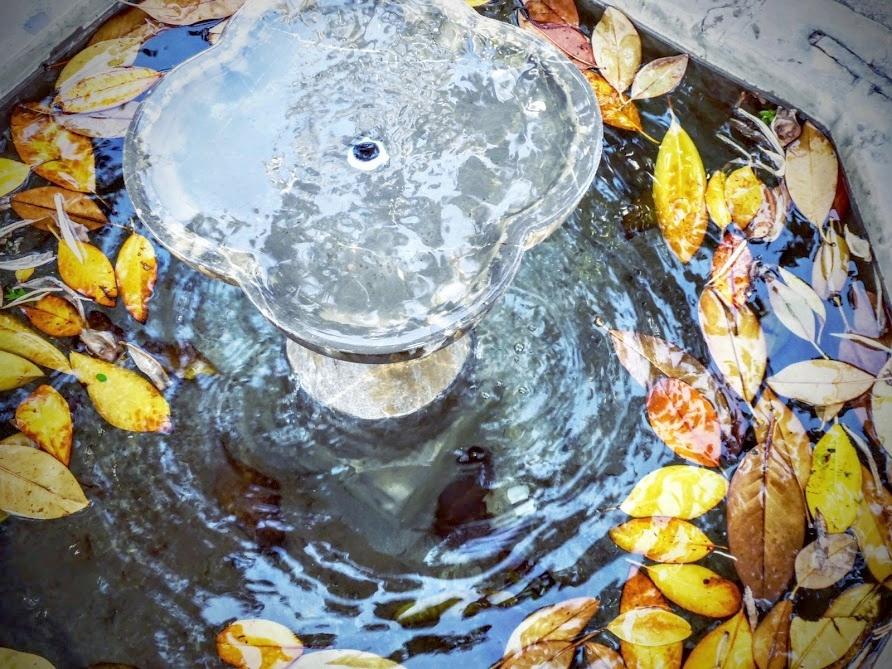 leaves in a fountain.JPG