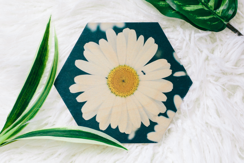 Flower wood prints Dagny Kream Photography-4.jpg