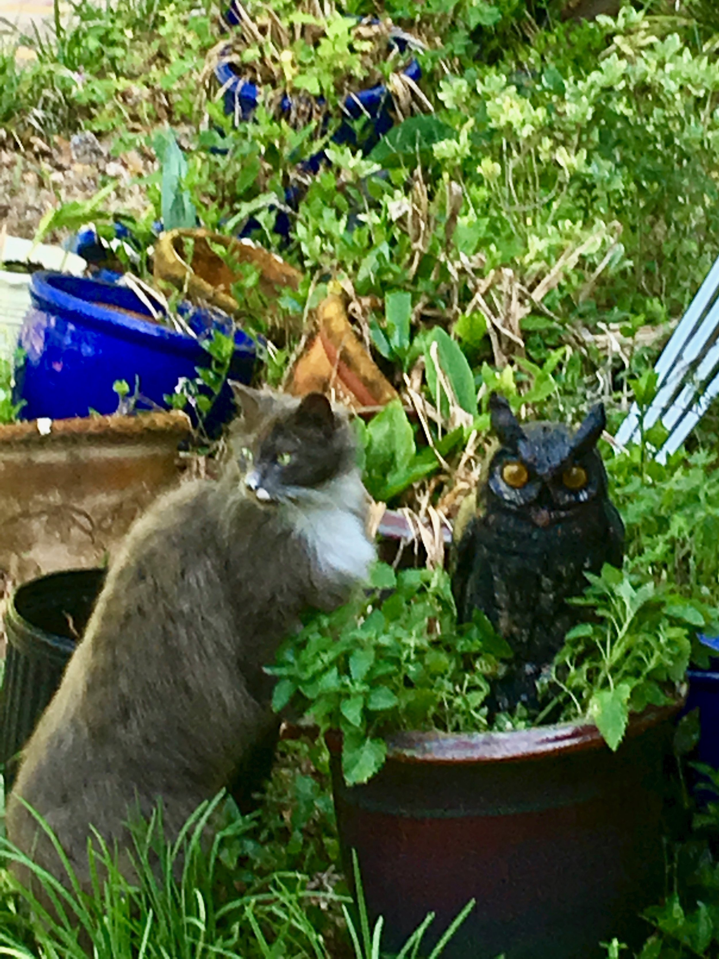 Sampson and Catnip
