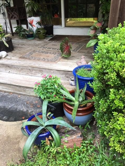 Succulents and a pot of pentas.