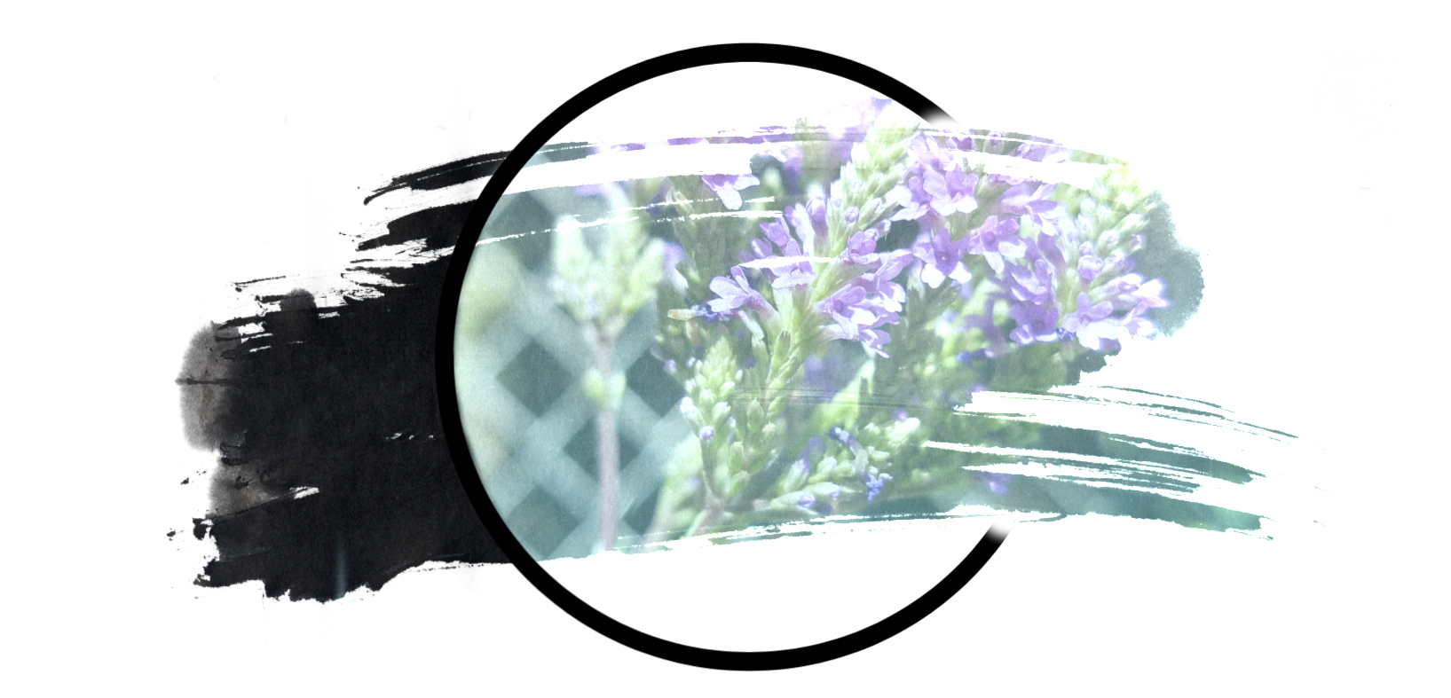 a brushstroke shaped image of blue vervain flowers with a blurred fence in the background and a large back circle around the image