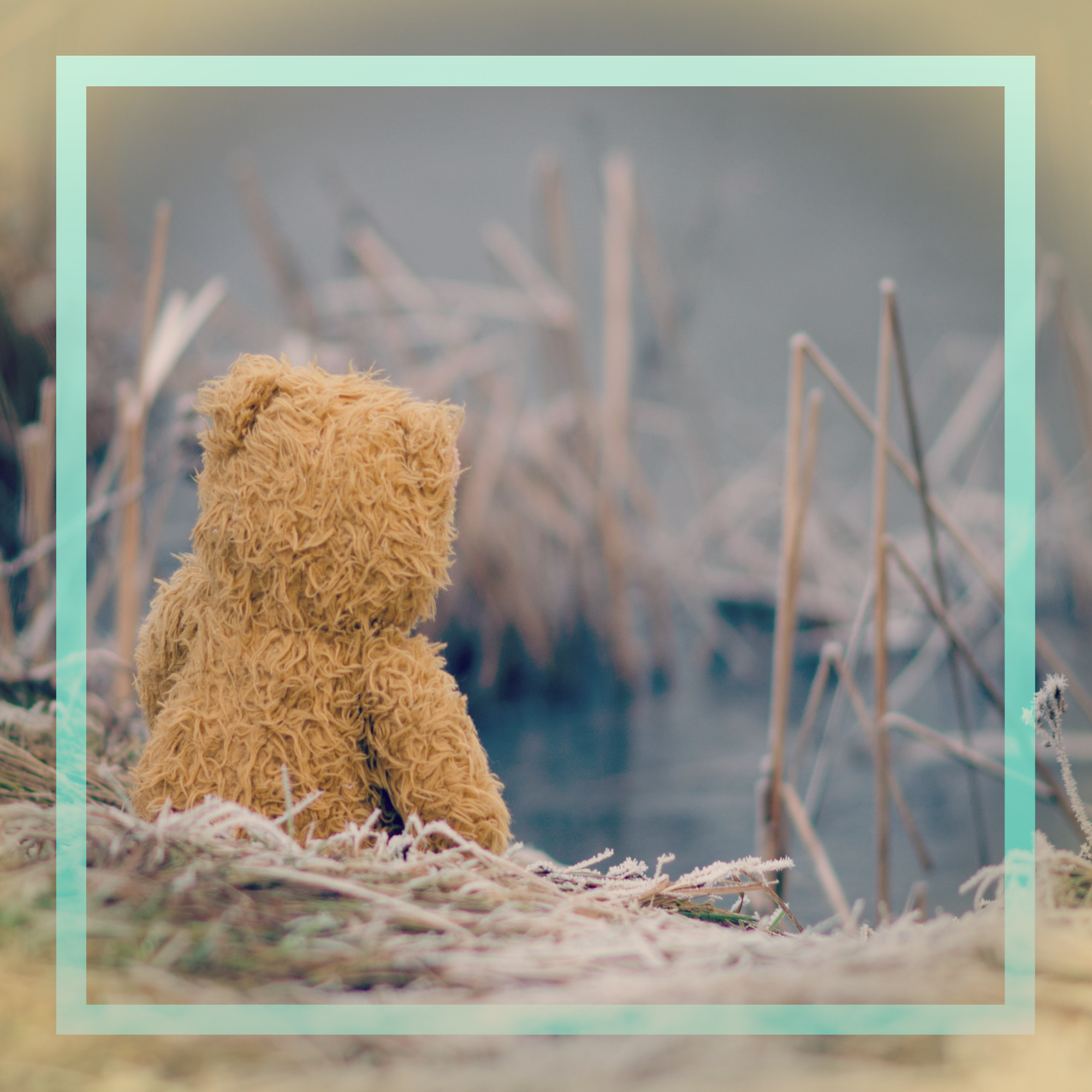 a square image with a light teal border of a beige teddy bear with its back to us sitting along a still pool of grey water surrounded by dried winter or fall like stalks of grass. The background or scene is a slight dark grey