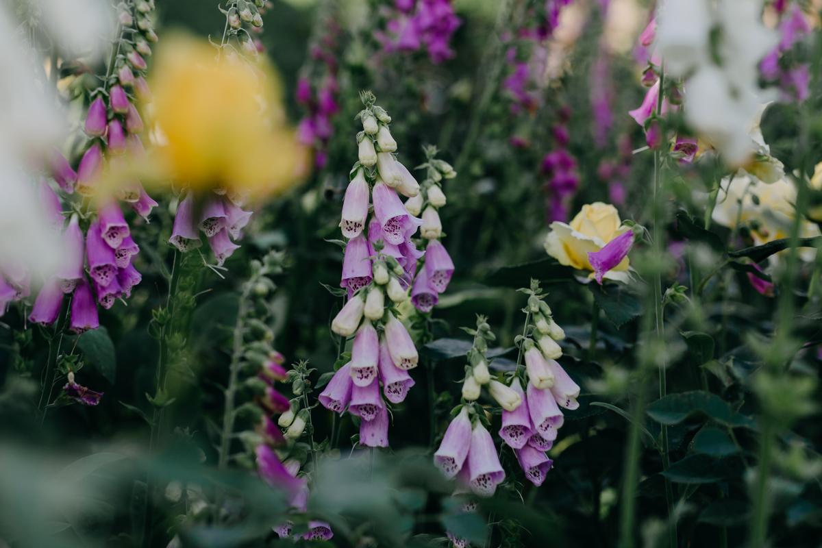 Rousham-Oxfordshire-garden_005.jpg
