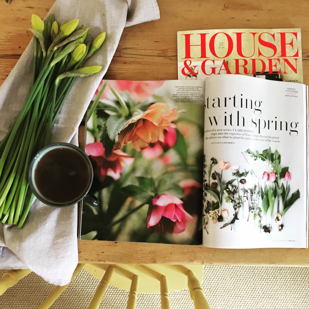 house-and-garden_JPG.jpg